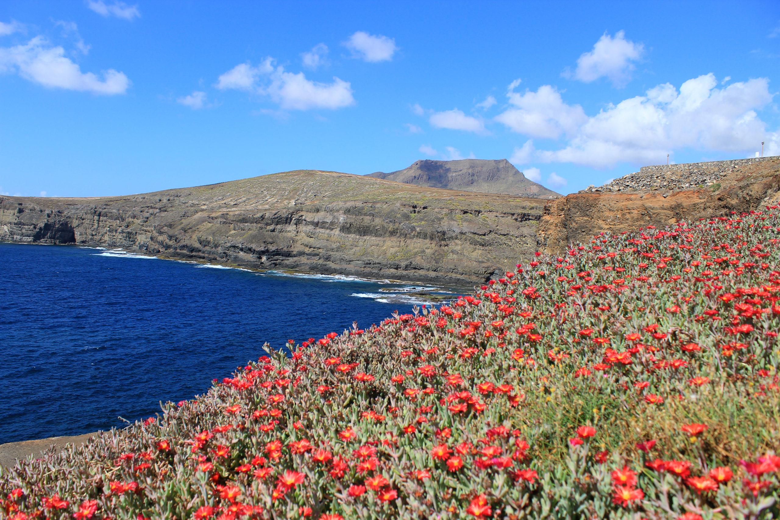 Czerwone kwiaty przy Zatoce