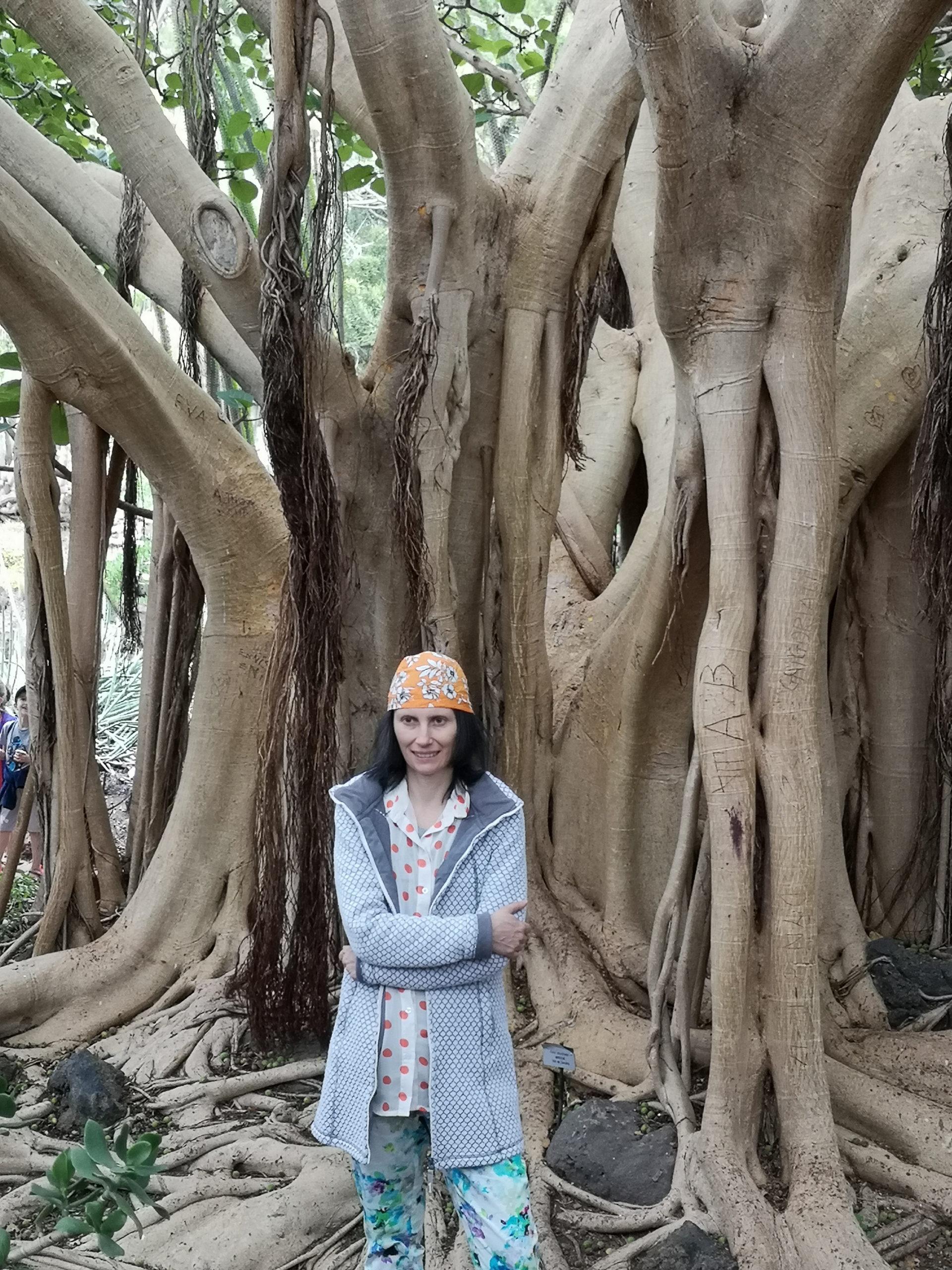 viola na tle drzewa