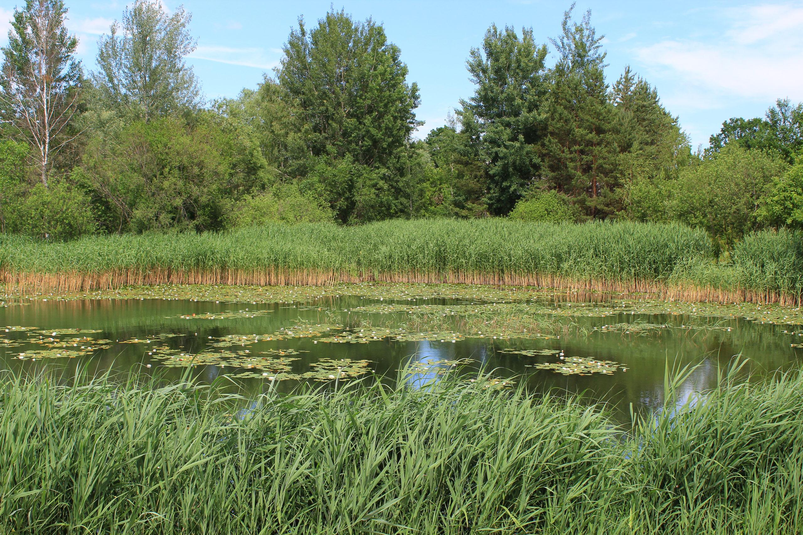 Zarośnięty zbiornik wodny