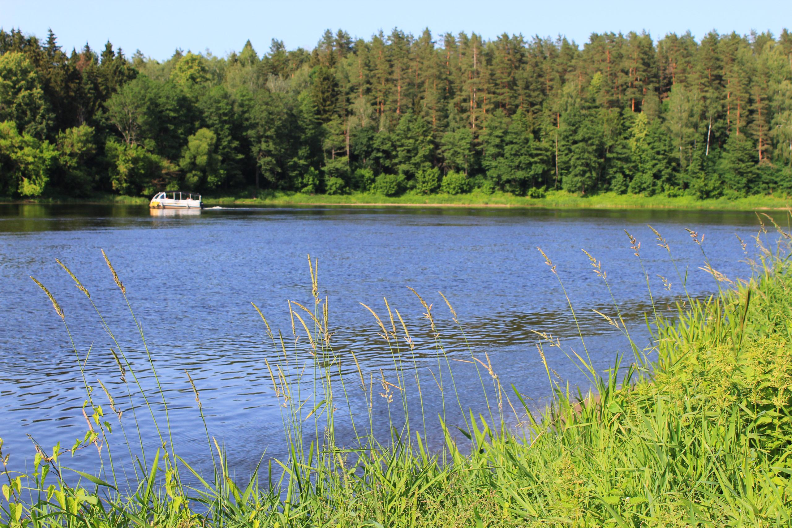 Widok na jezioro i las