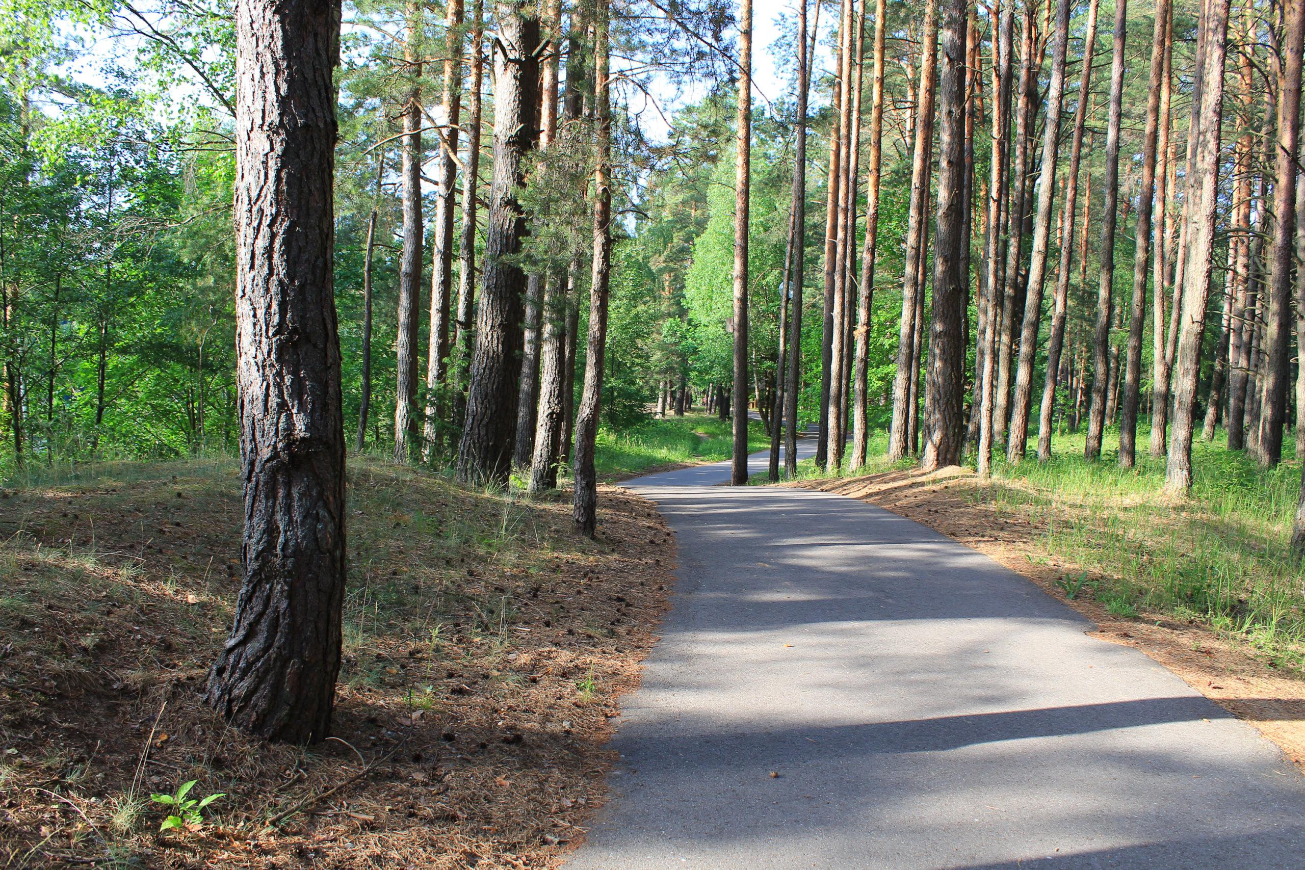 Droga w lesie sosnowym