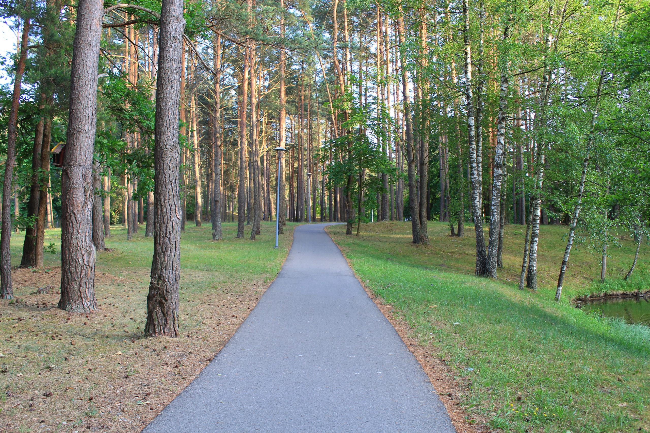 Asfaltowa ścieżka w lesie