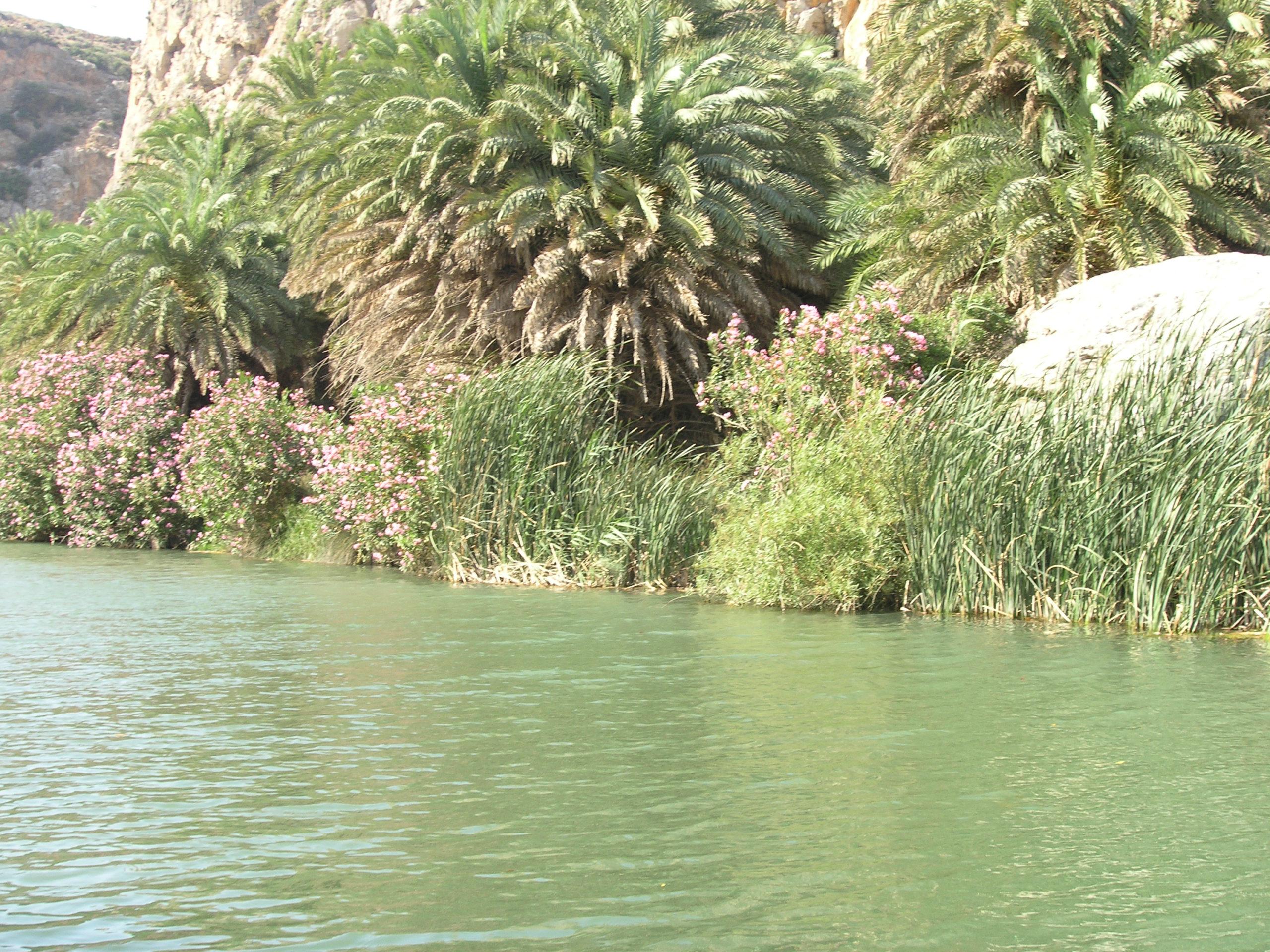 Wodę i Palmy na brzegu