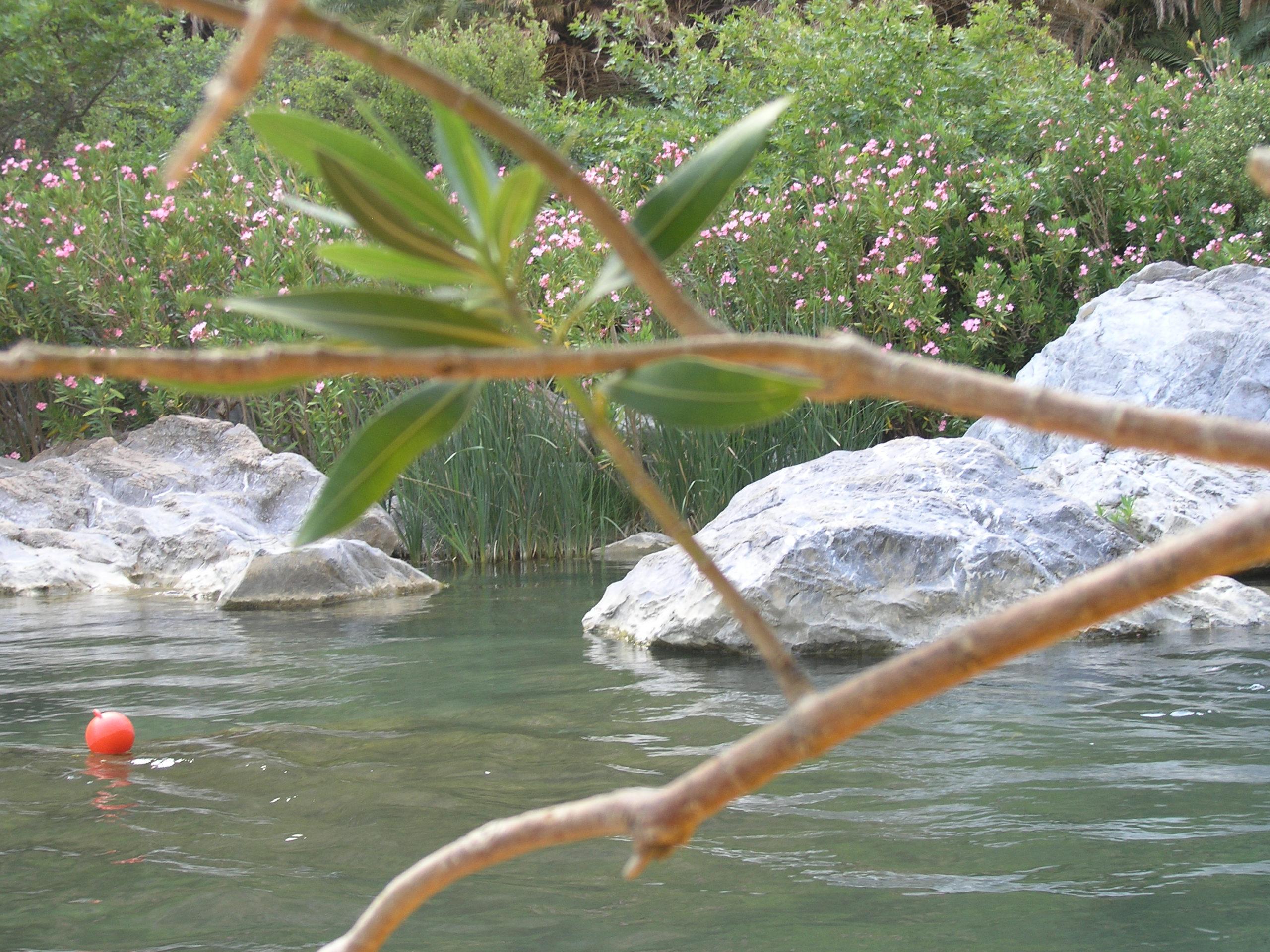 Woda i roślinność