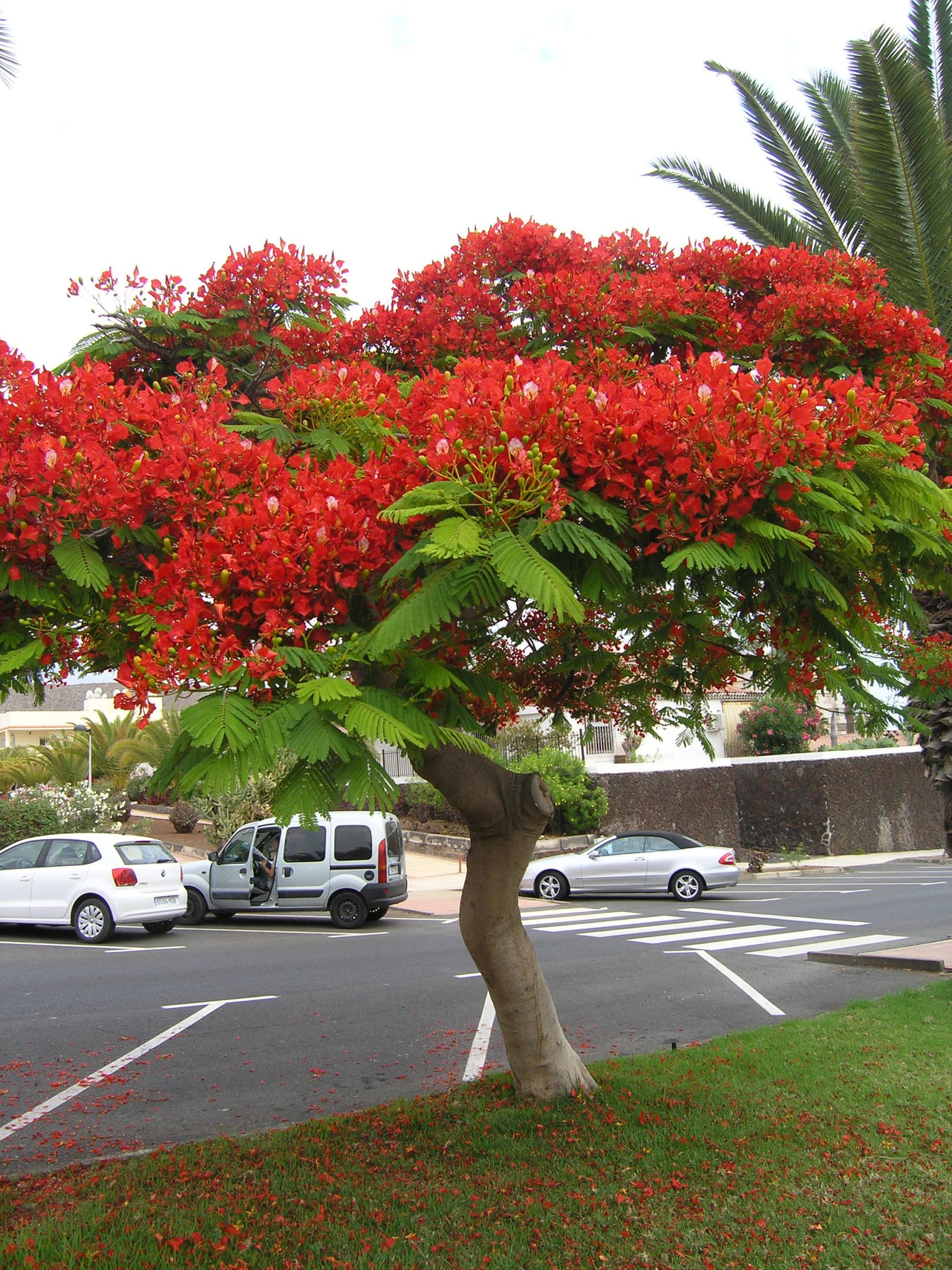 Drzewo z czerwonymi kwiatami