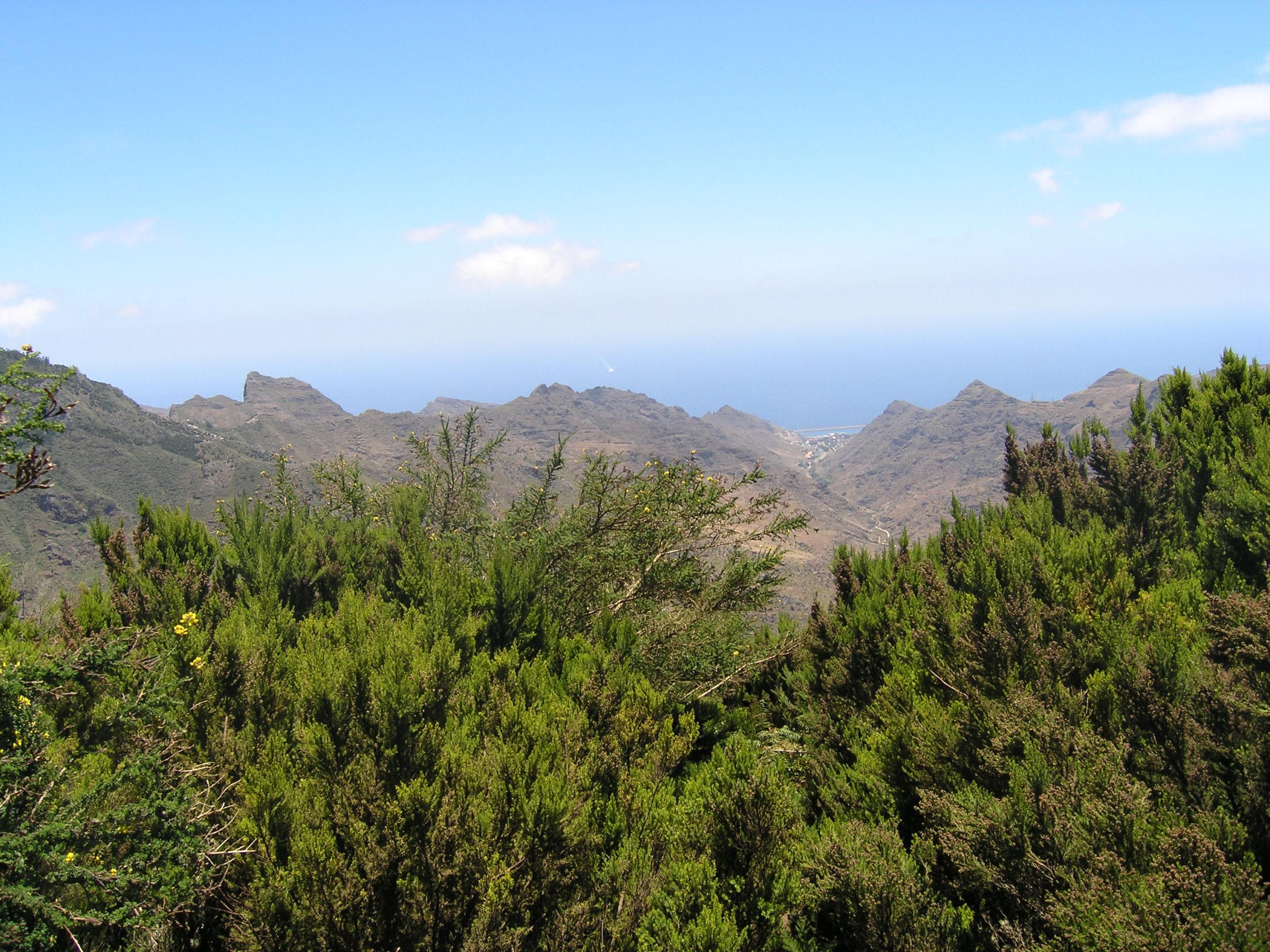 Widok na zieleń i góry