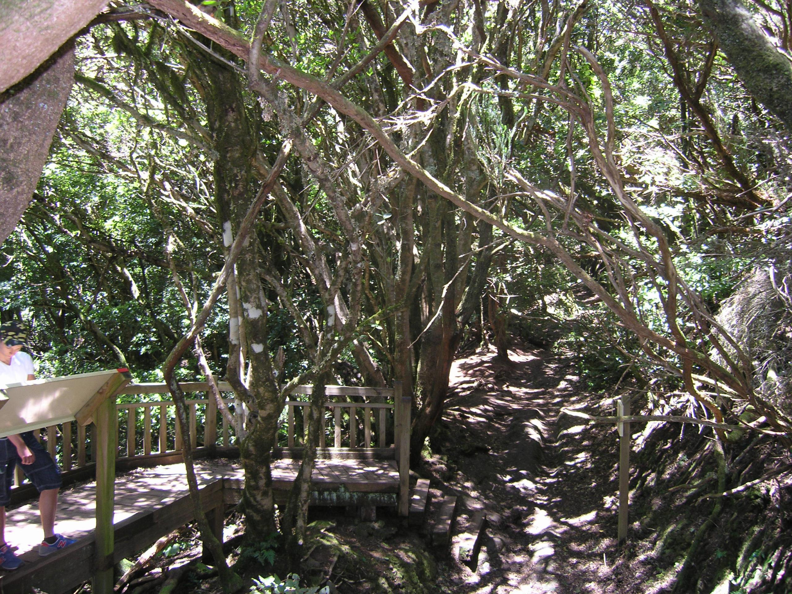Szlak wśród gęstych drzew