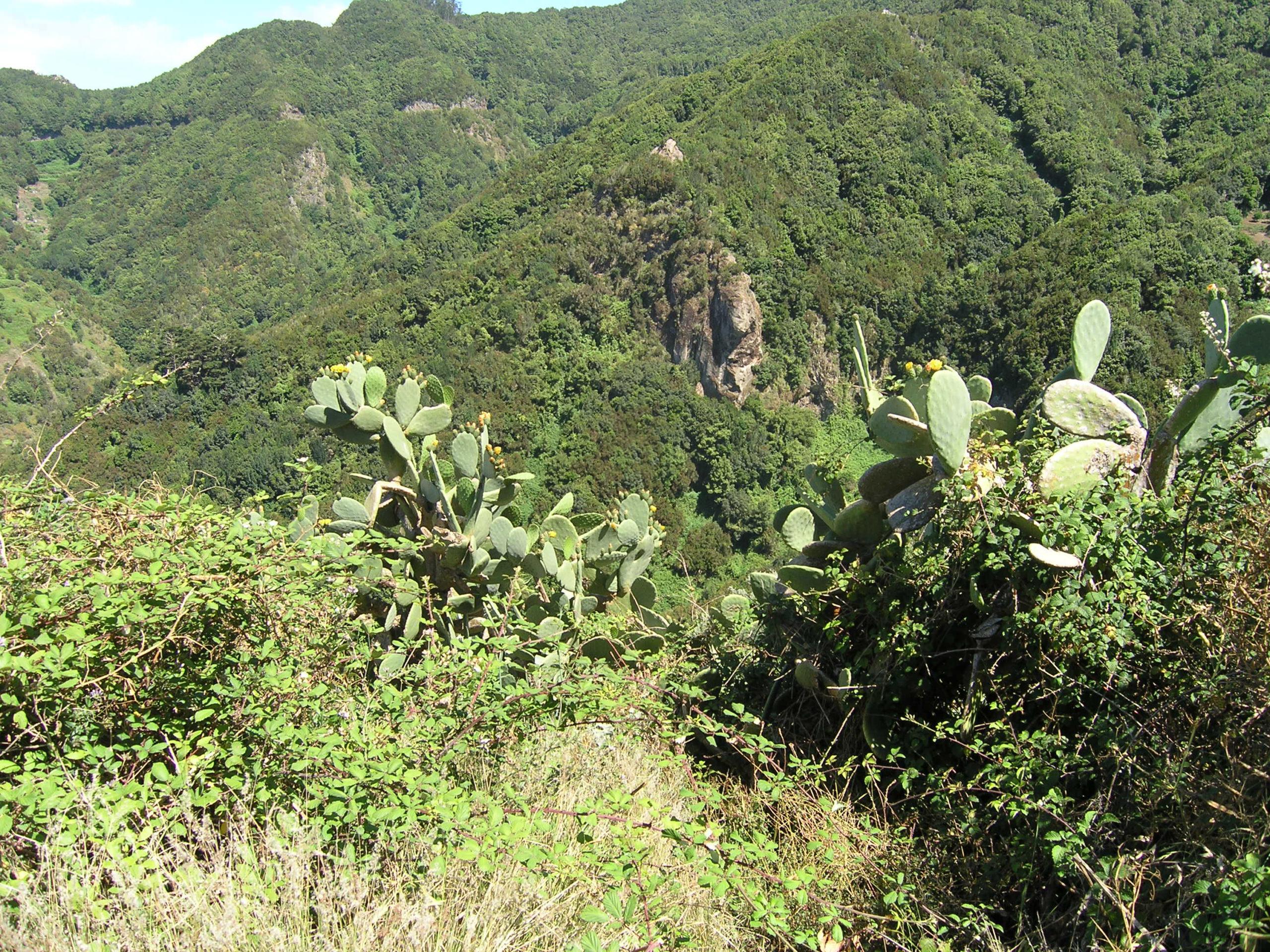 Kaktusy na tle gór