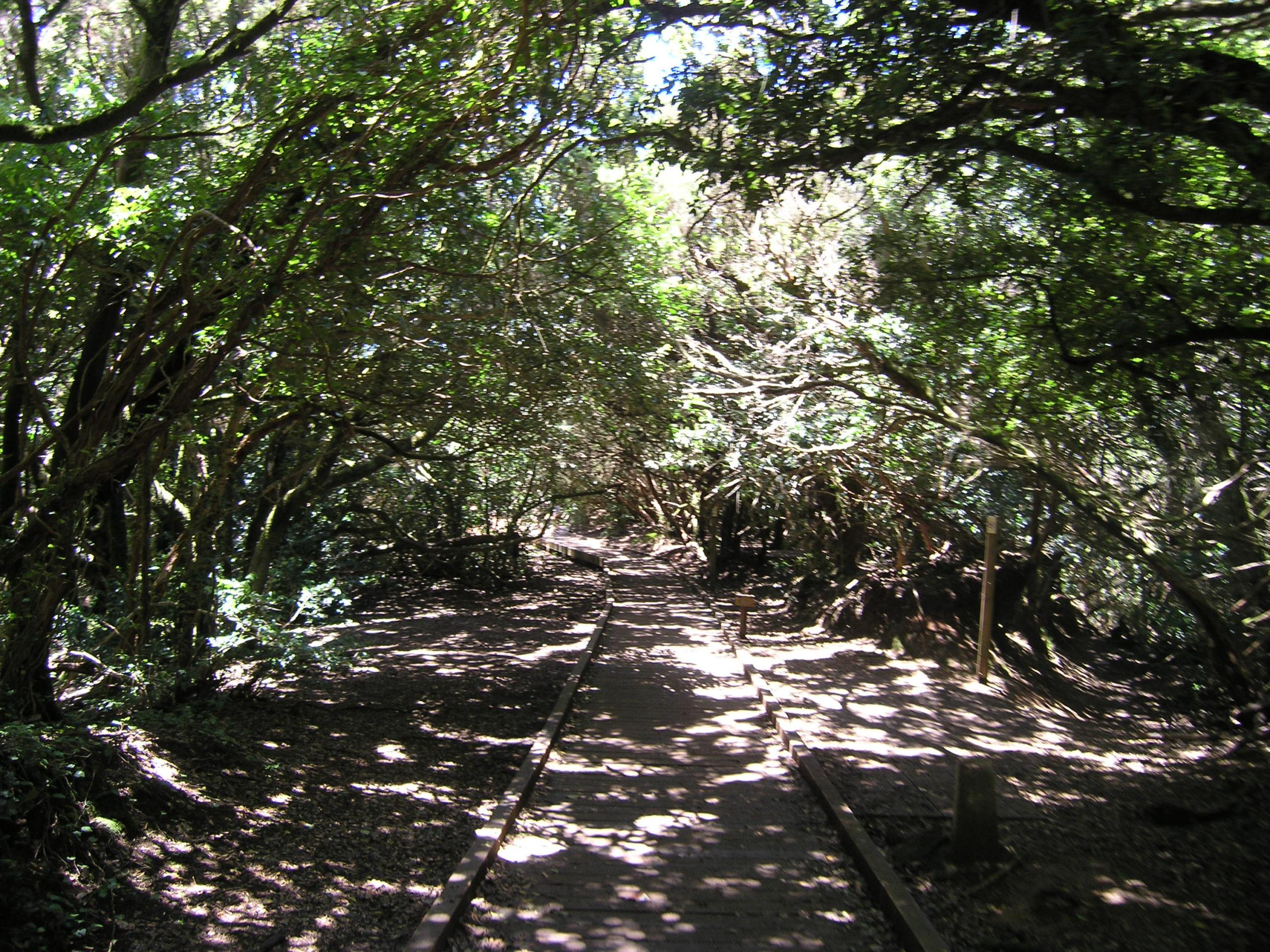 Szlak wśród drzew