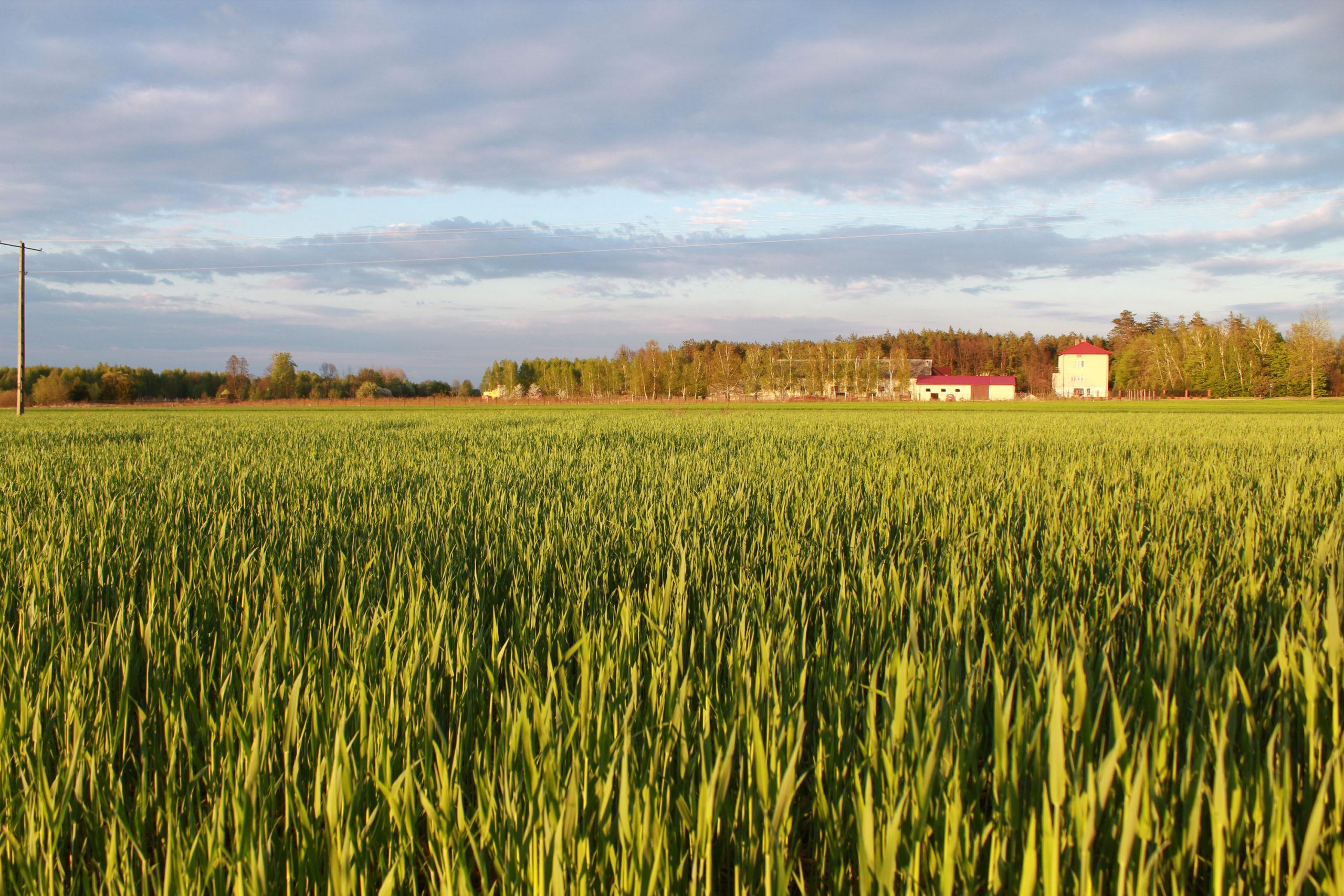 Drelow, widok na pole