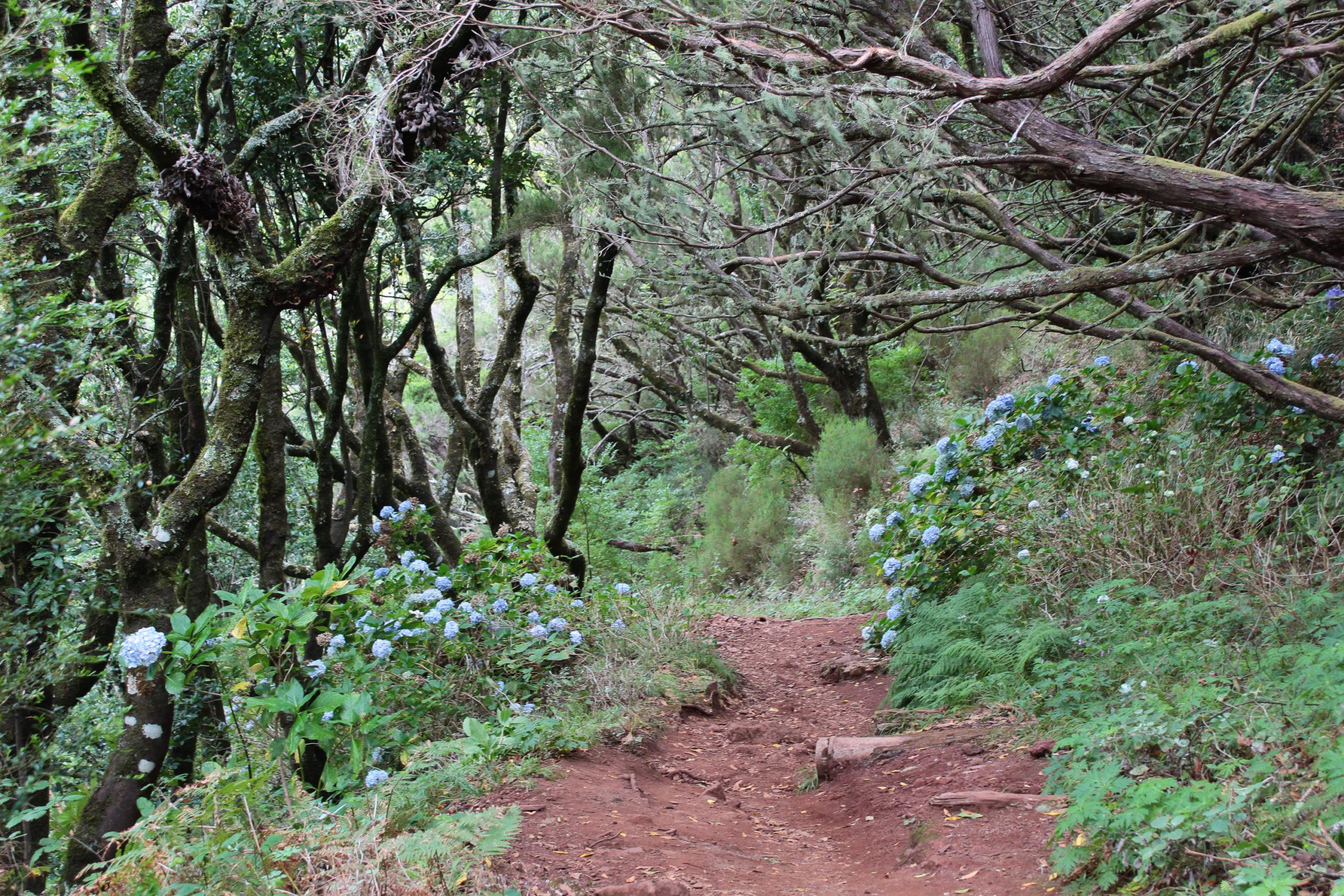 madera ścieżka