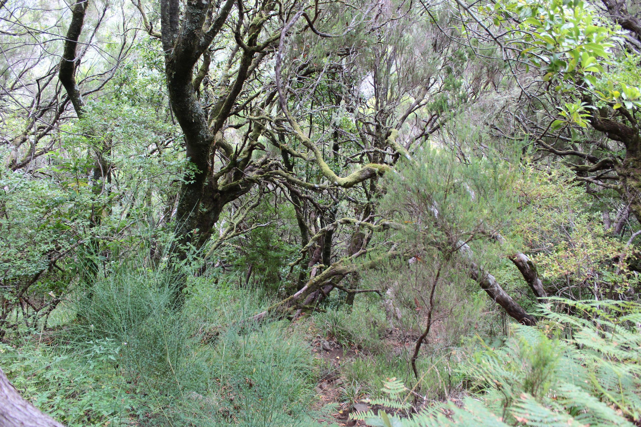madera drzewa