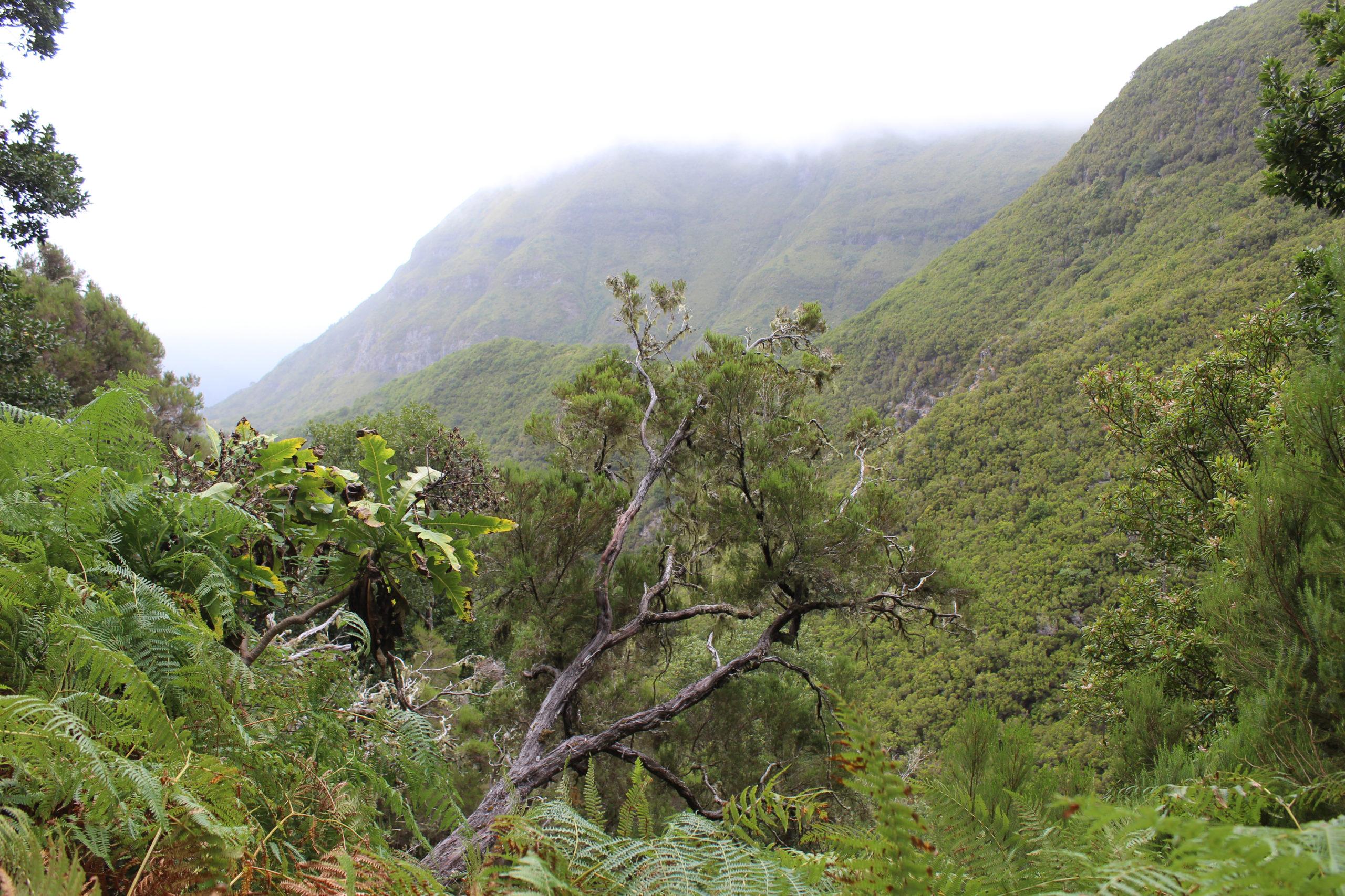 madera widok na góry