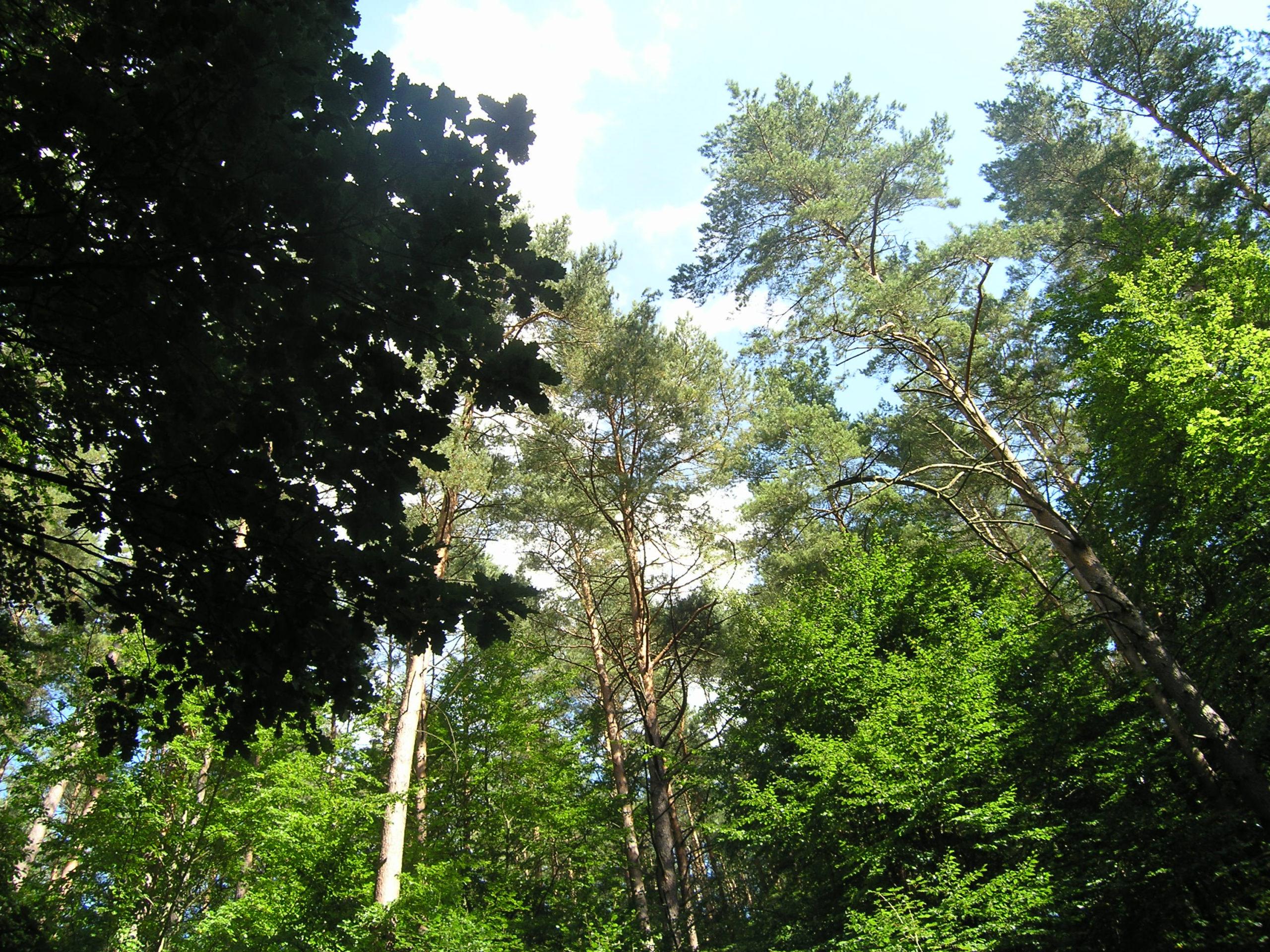 widok na korony drzew