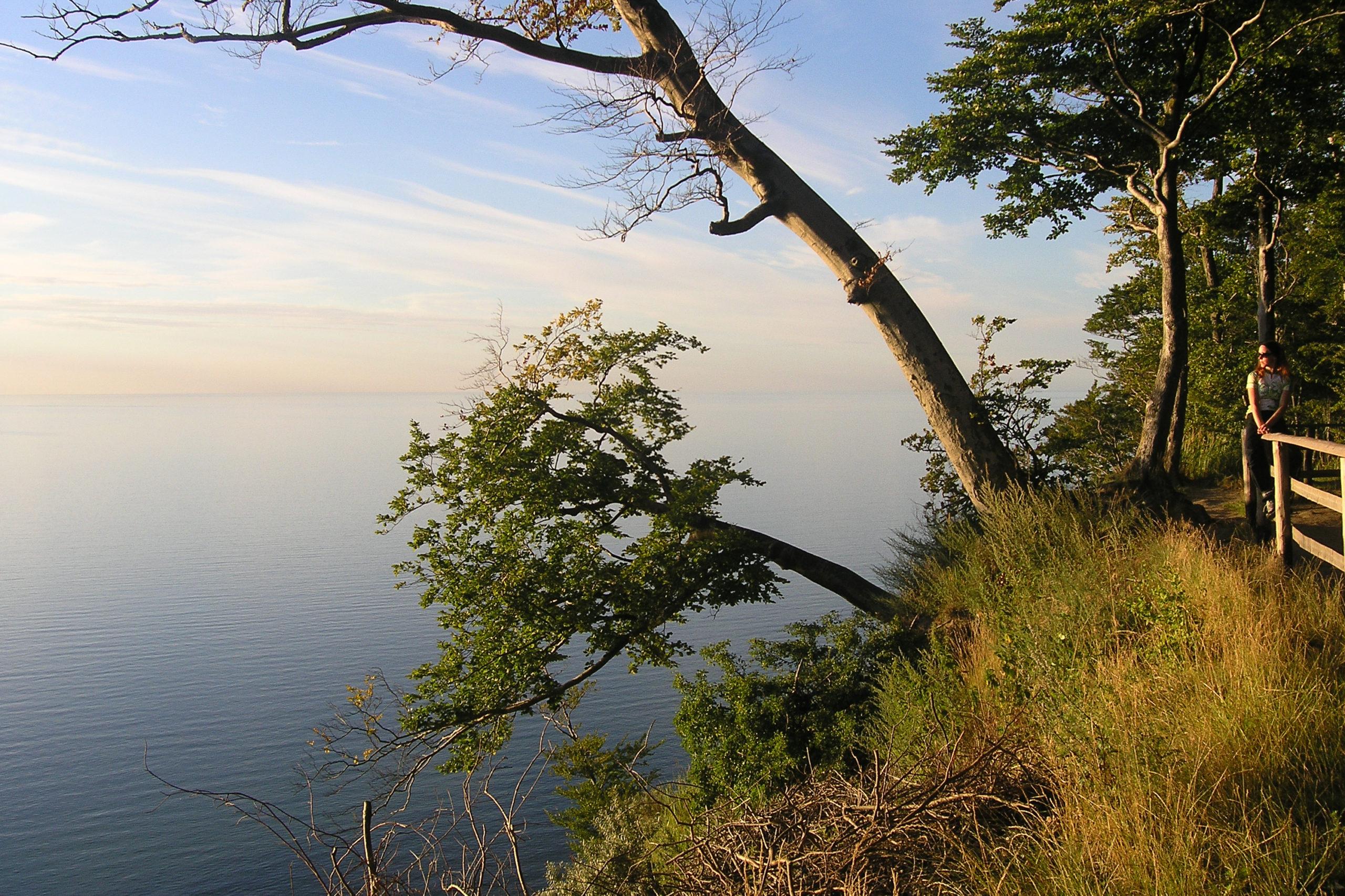 Międzyzdroje widok na morze i drzewo