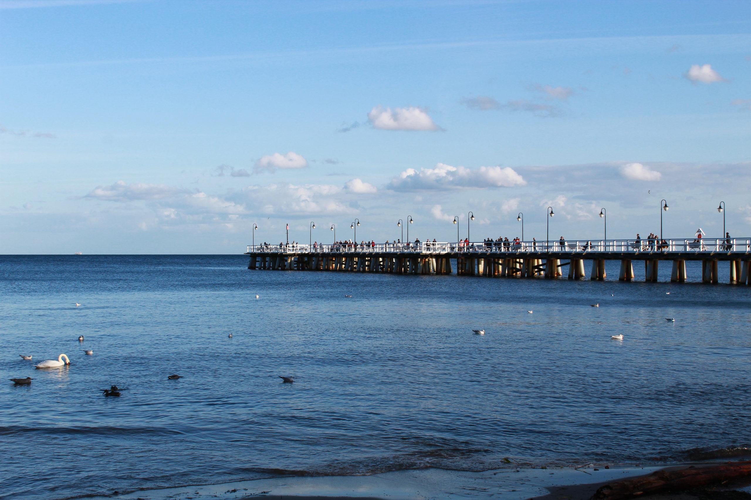 Gdynia widok na molo, morze i ptaki na wodzie