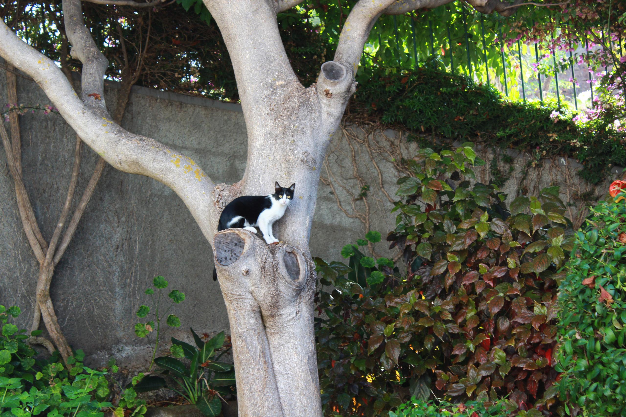 madera kot na drzewie