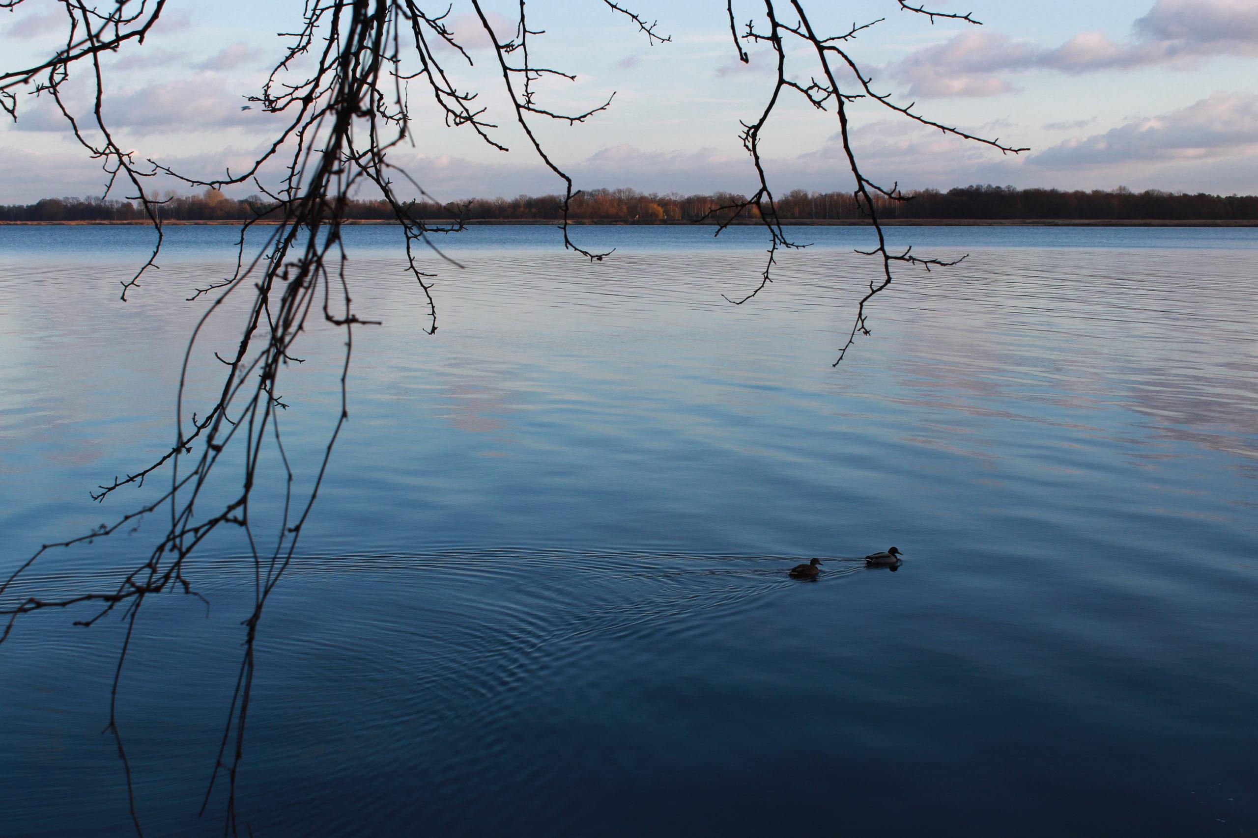 serock widok na jezioro i kaczki