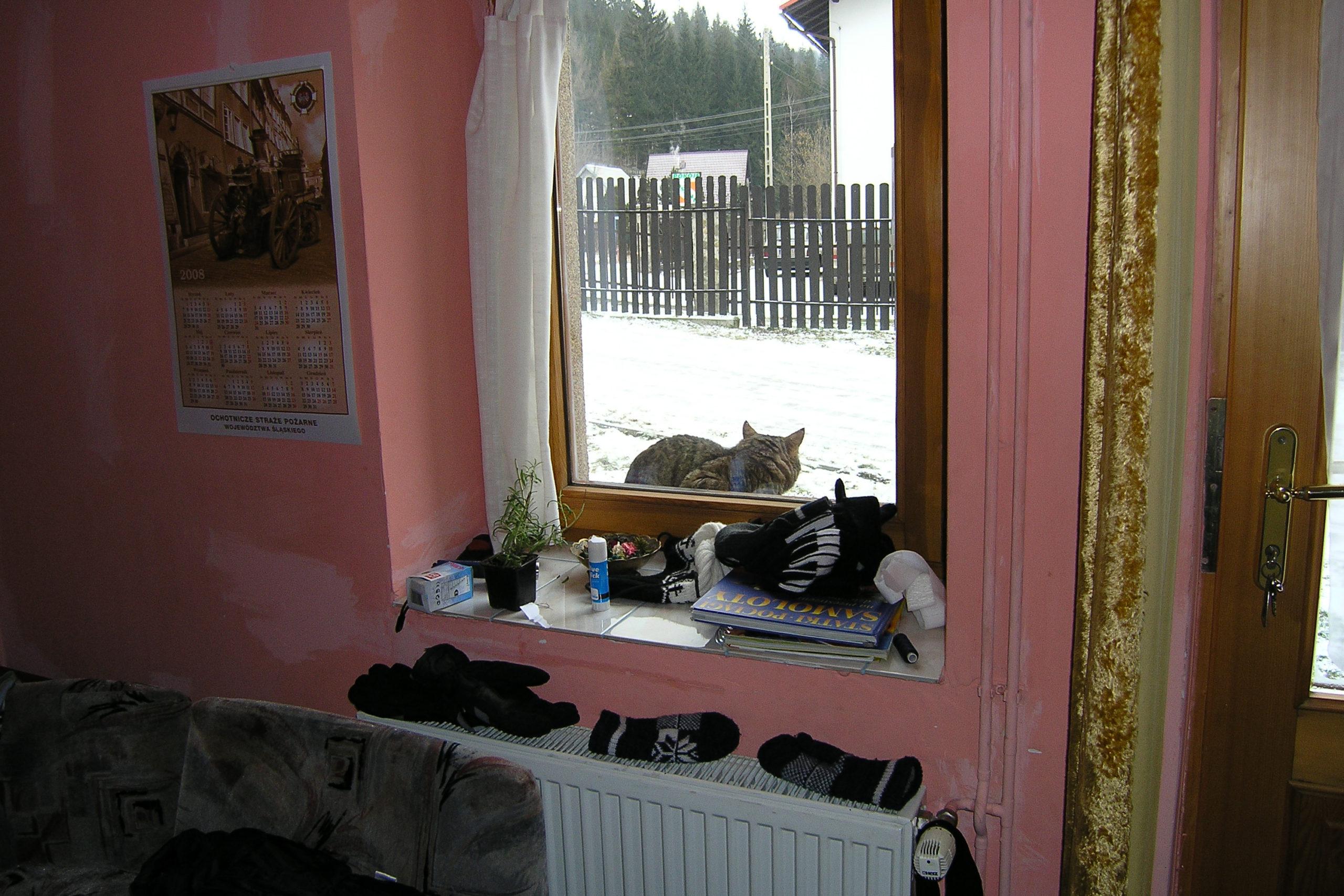 wisła kot na parapecie za oknem
