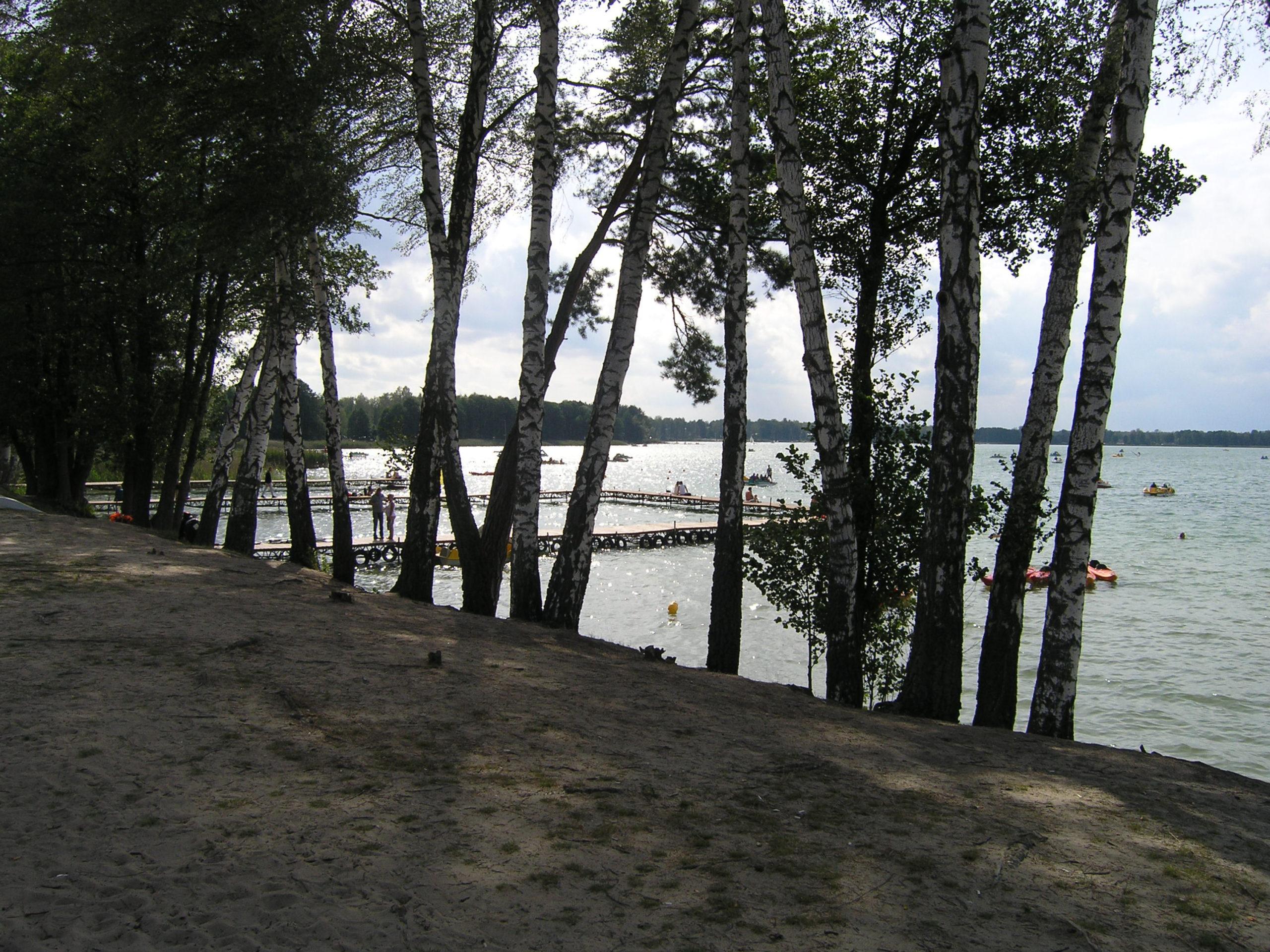 okuninka widok na jezioro i brzozy nad jeziorem