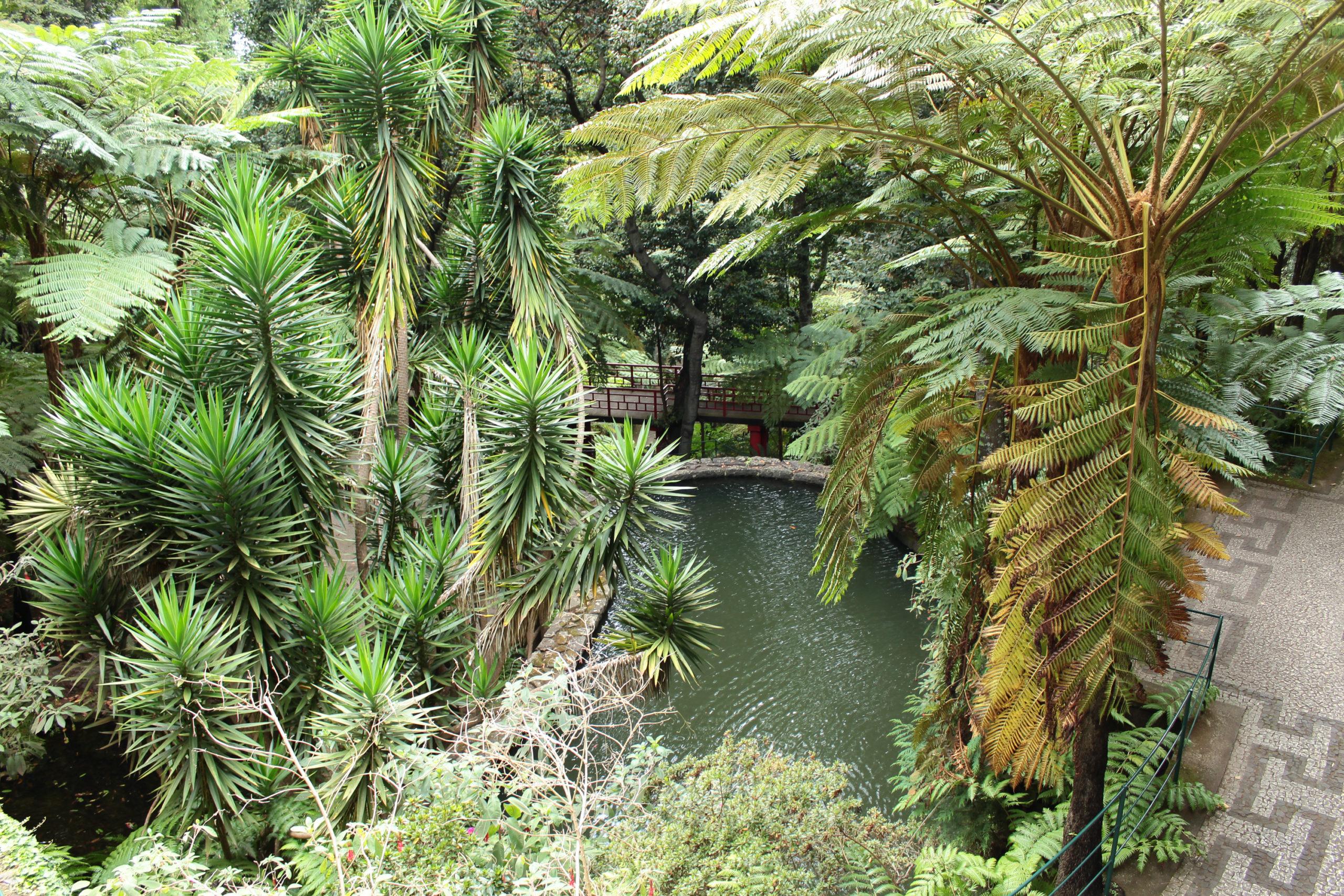 madera palmy ogród