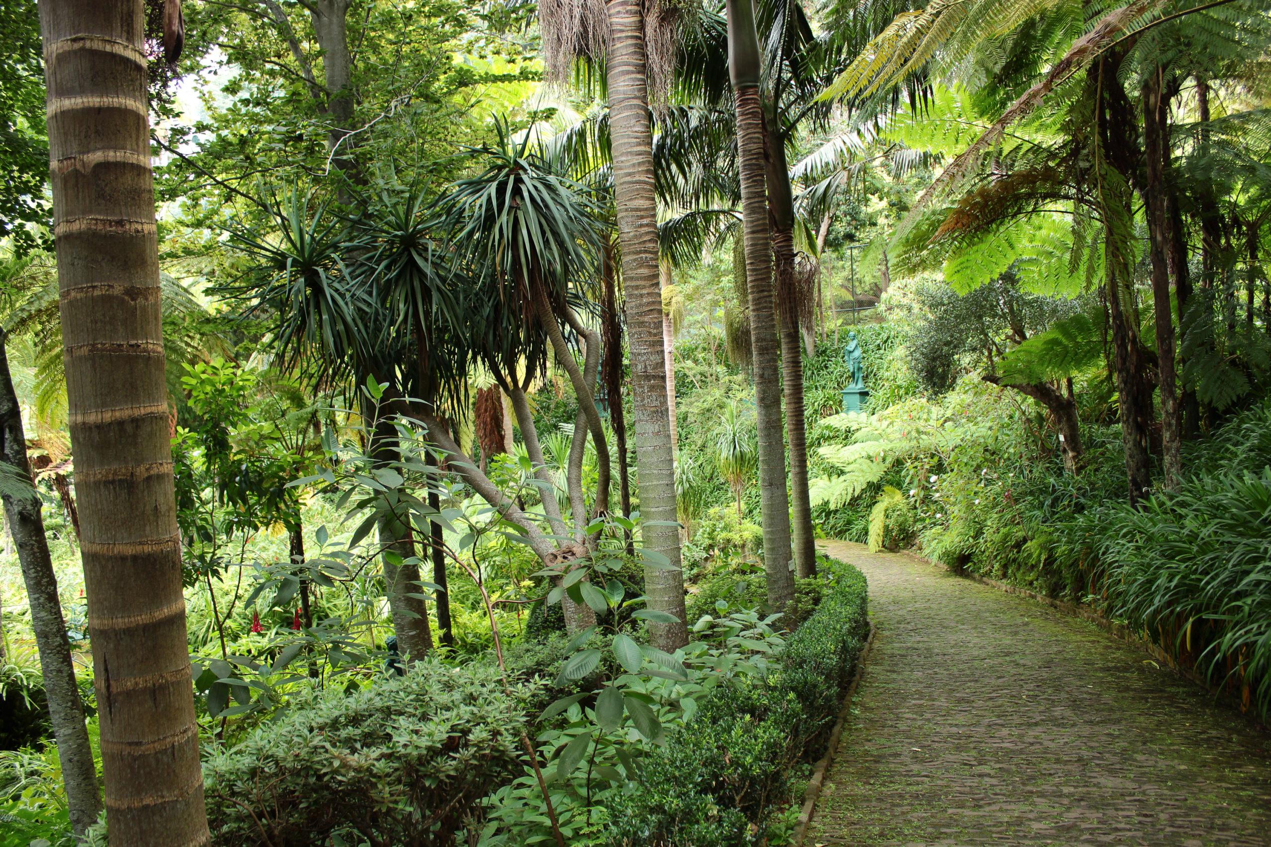 madera palmy ścieżka