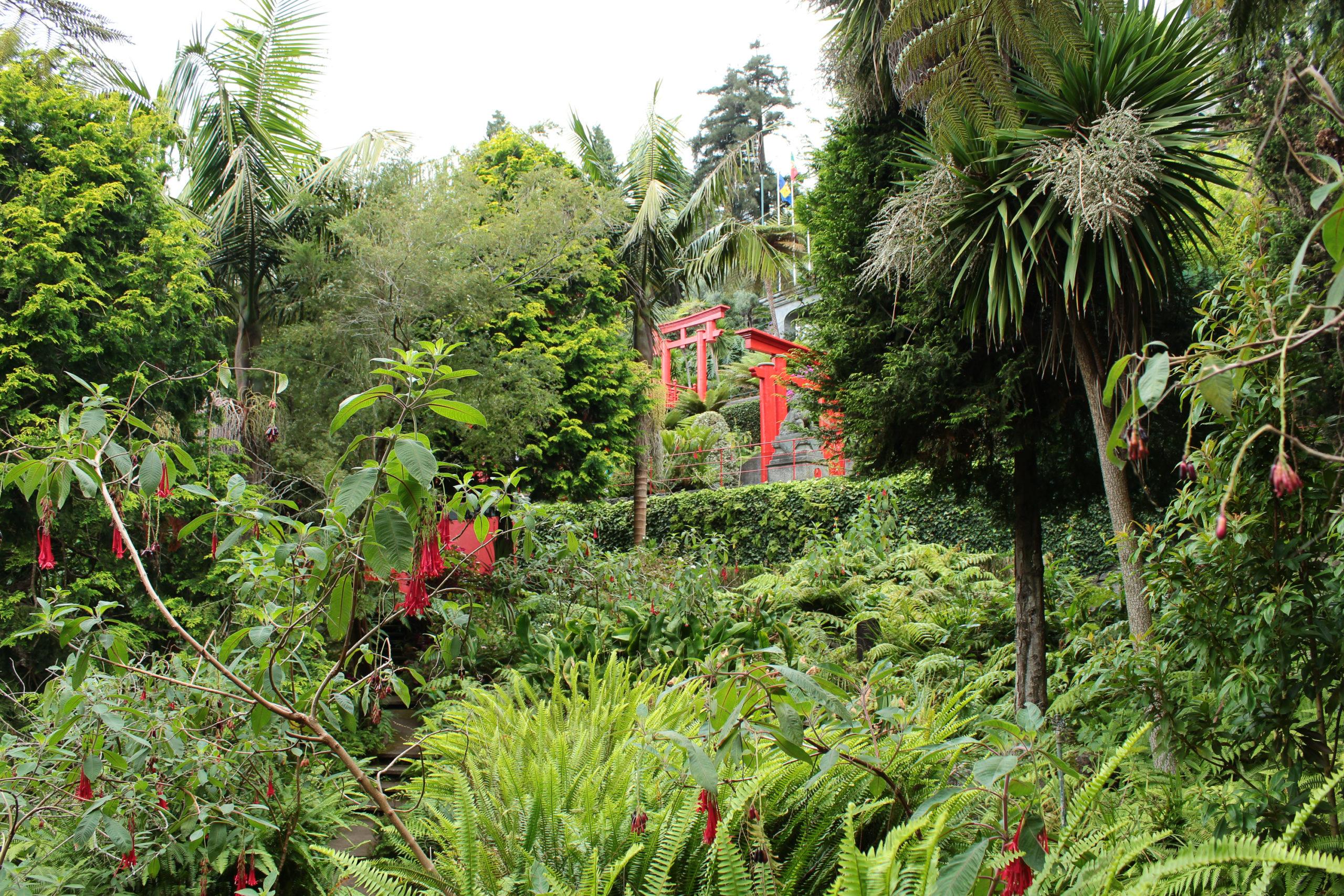 madera zielony ogród