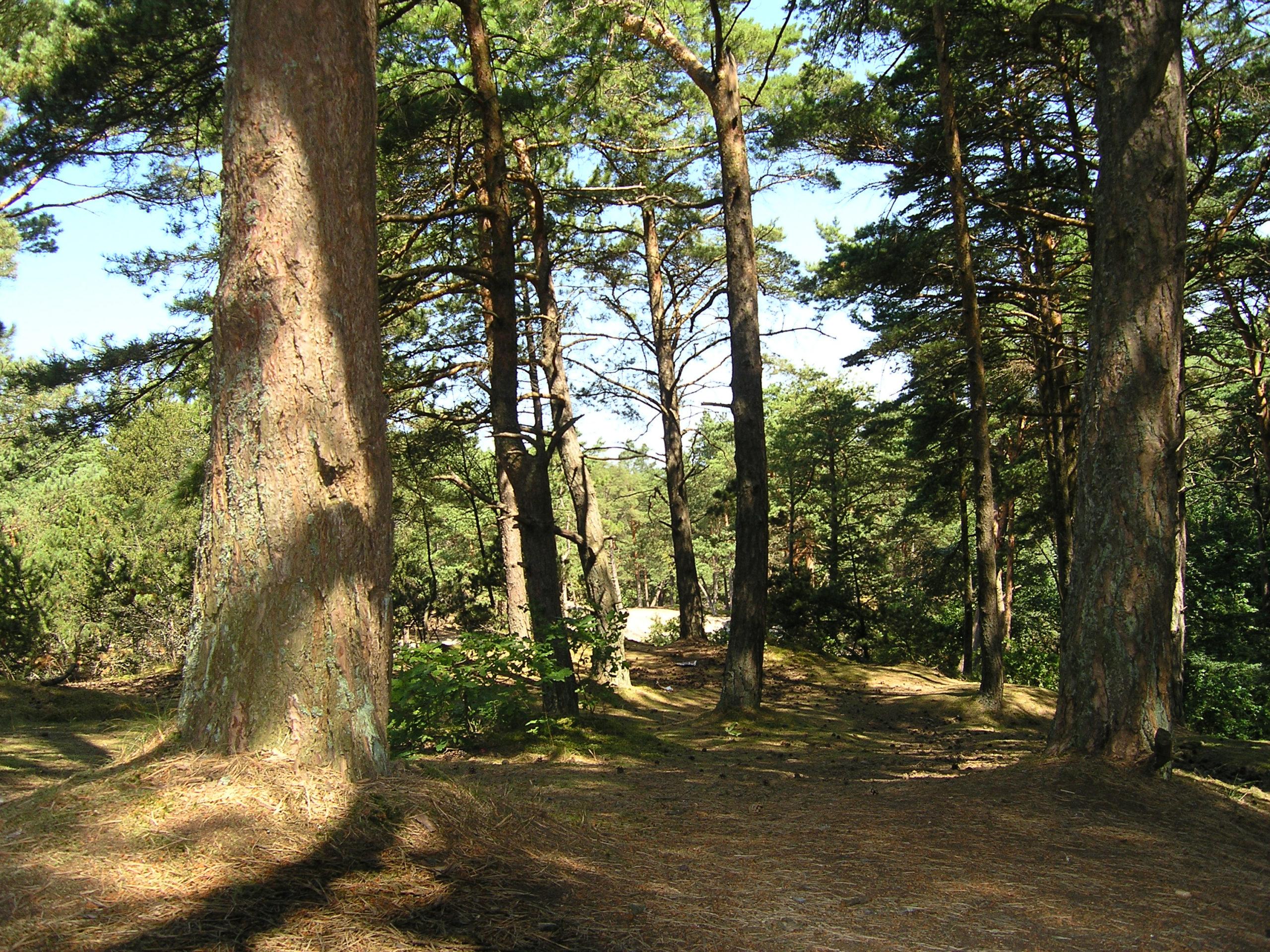 wisełka widok na las