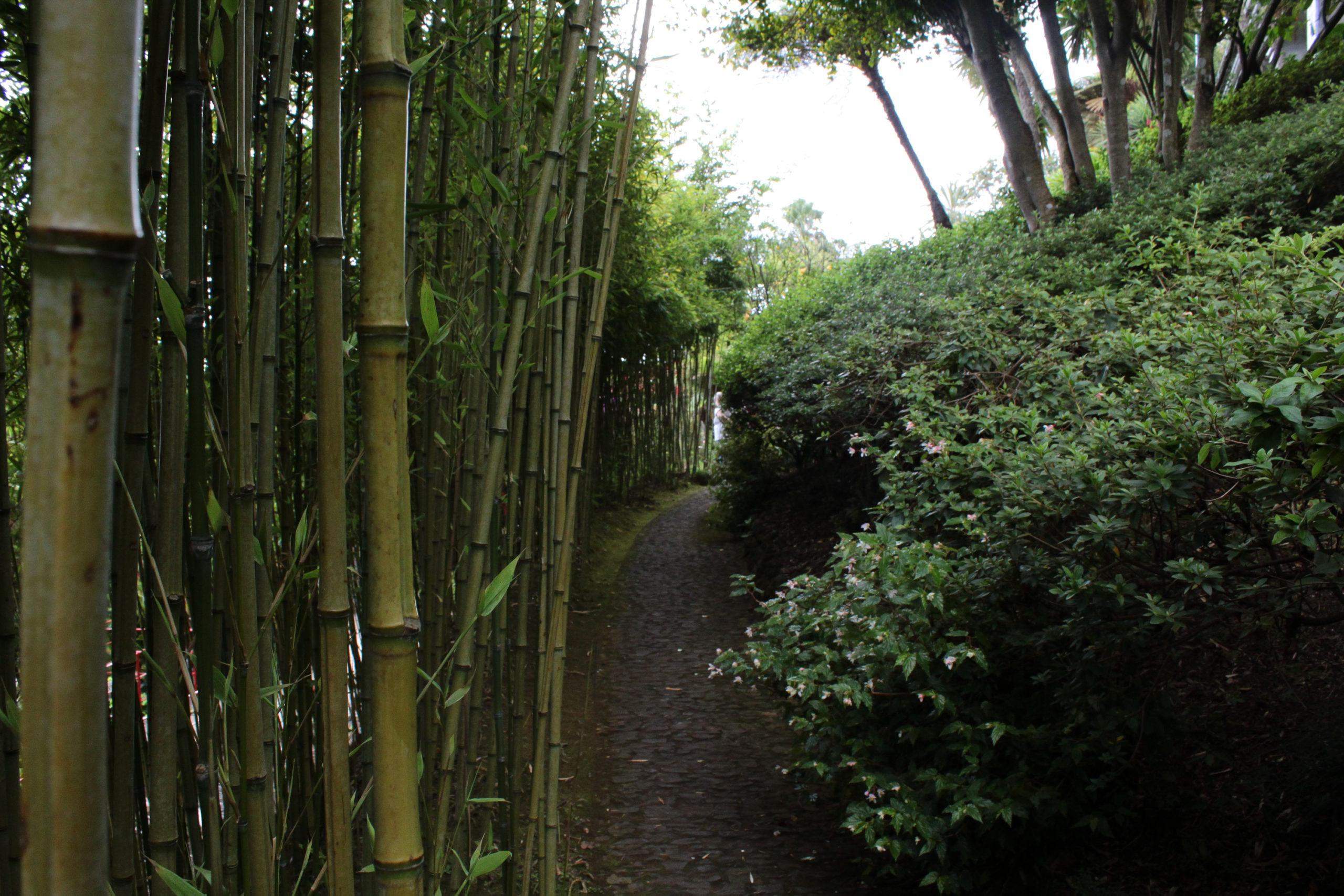 madera bambusy i ścieżka