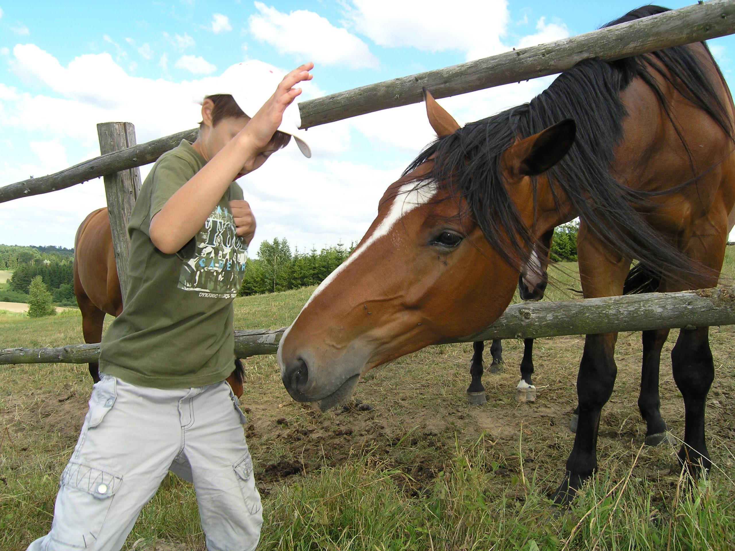 kożyczkowo karmienie koni