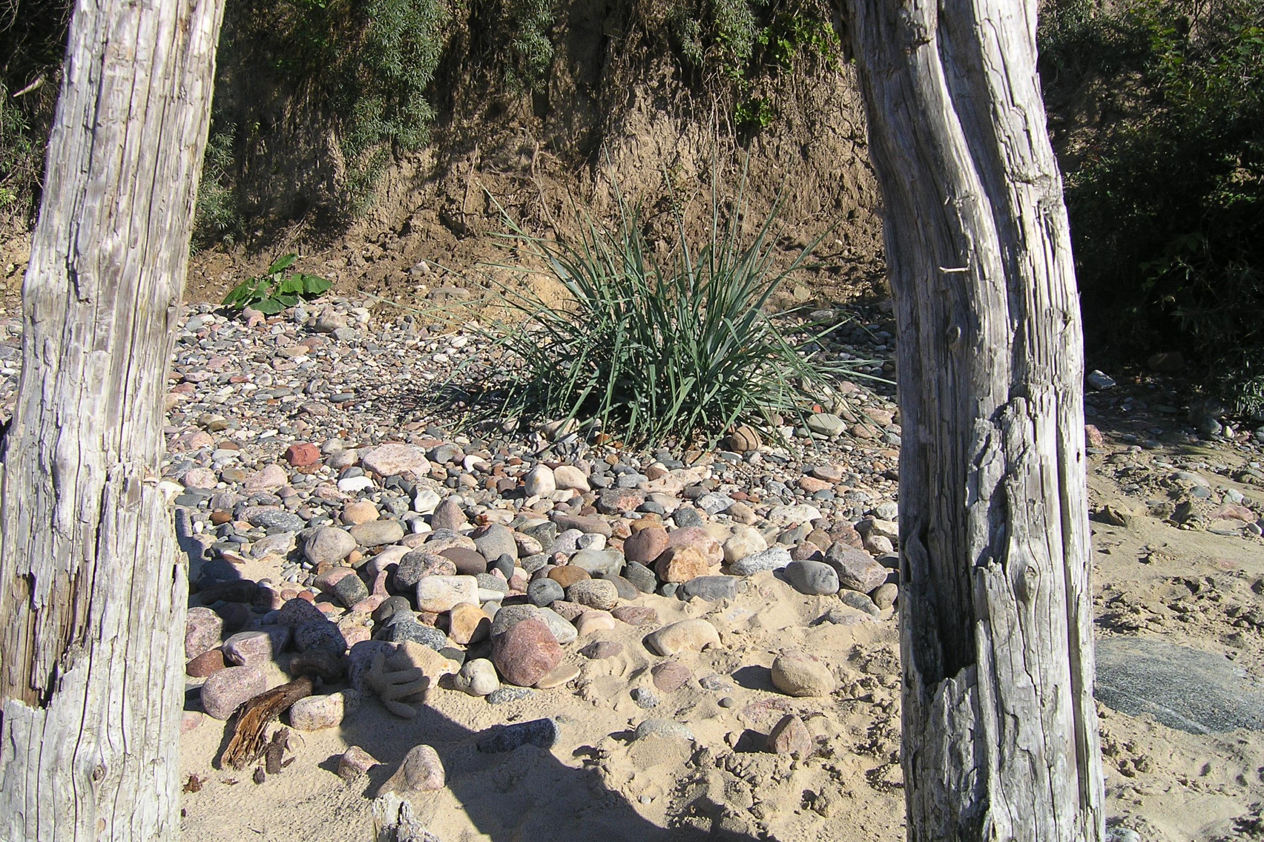 Międzyzdroje suche drzewa i roślina