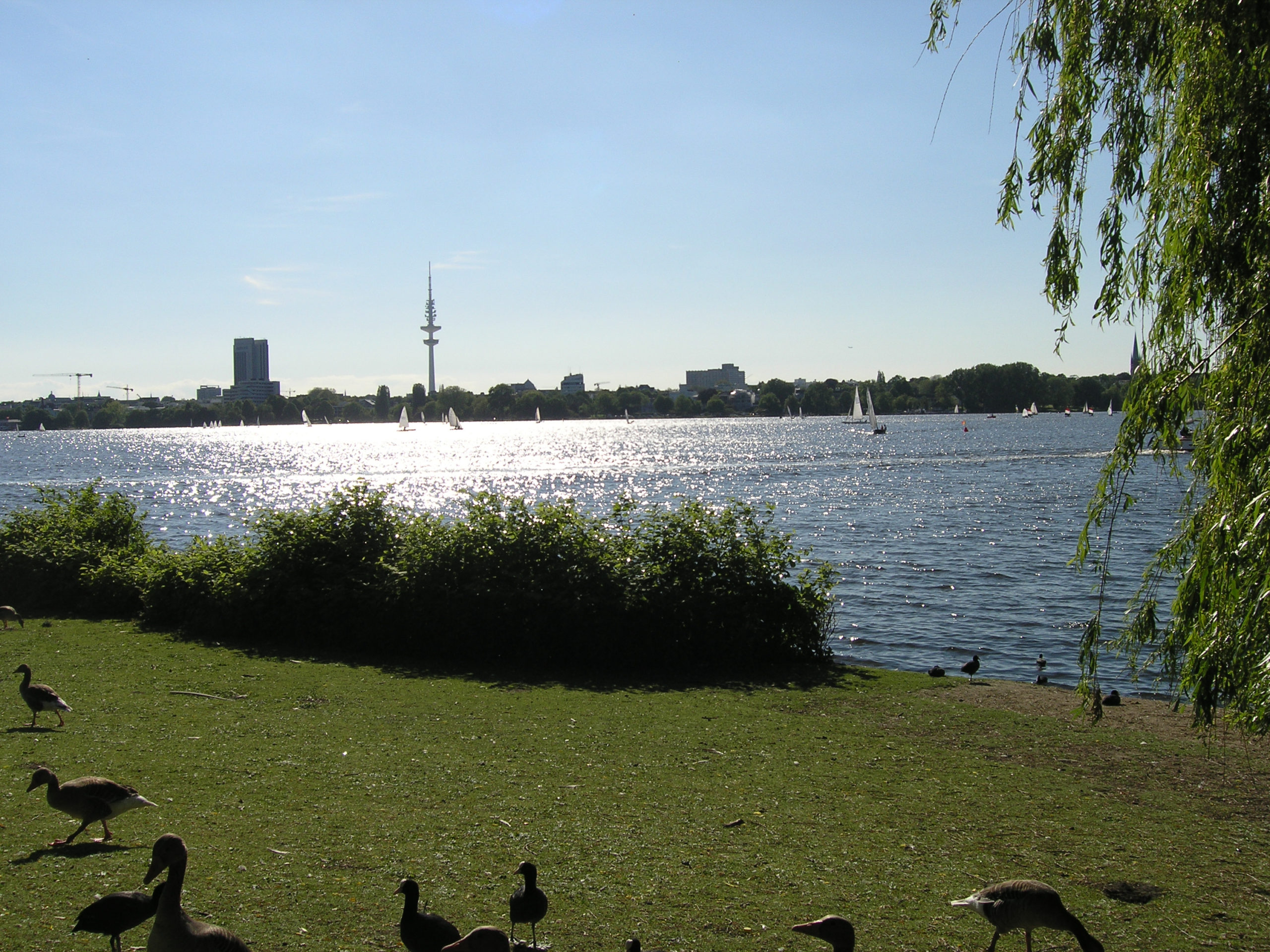 hamburg panorama na miasto, kaczki, woda i łódki