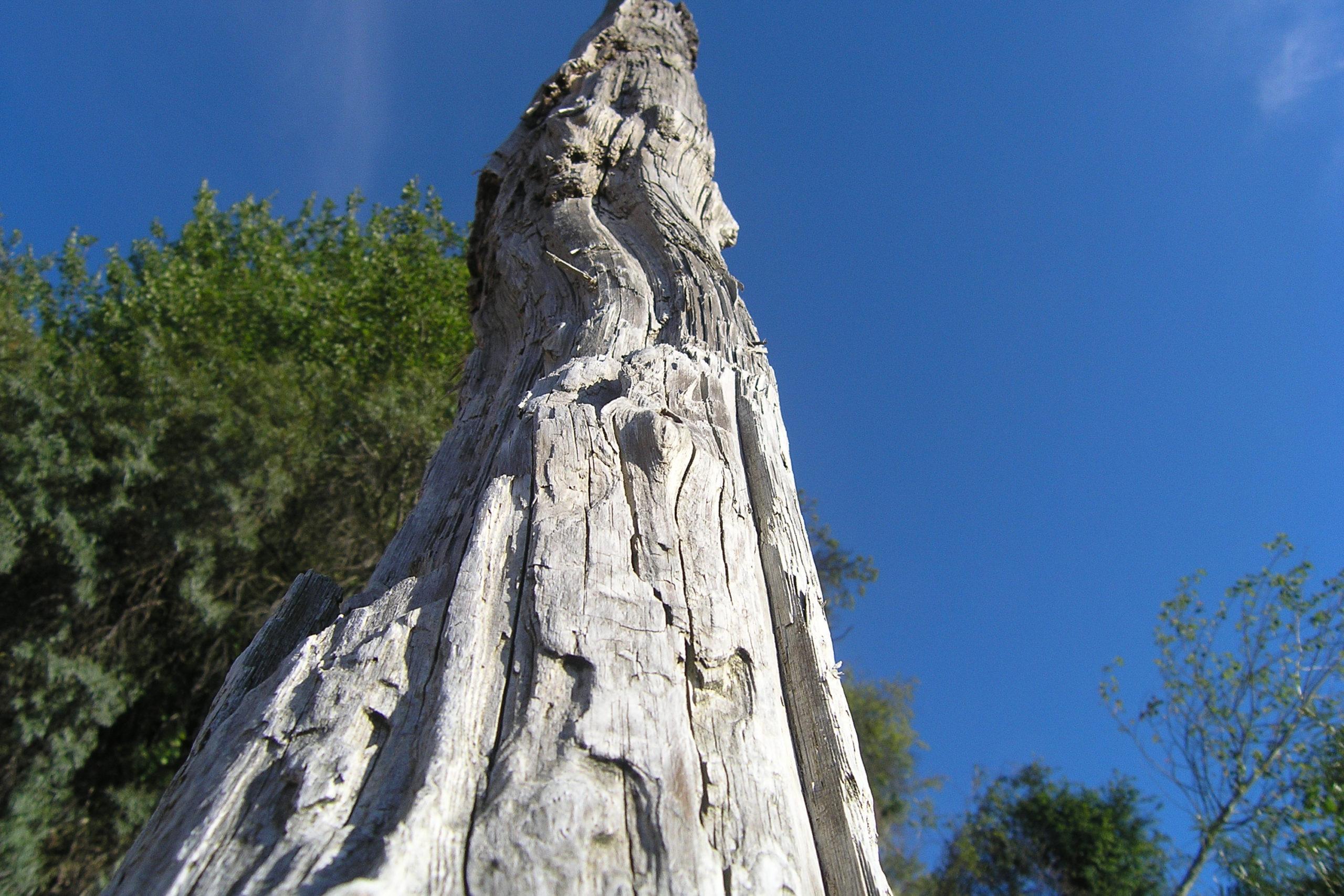 Międzyzdroje suche drzewo