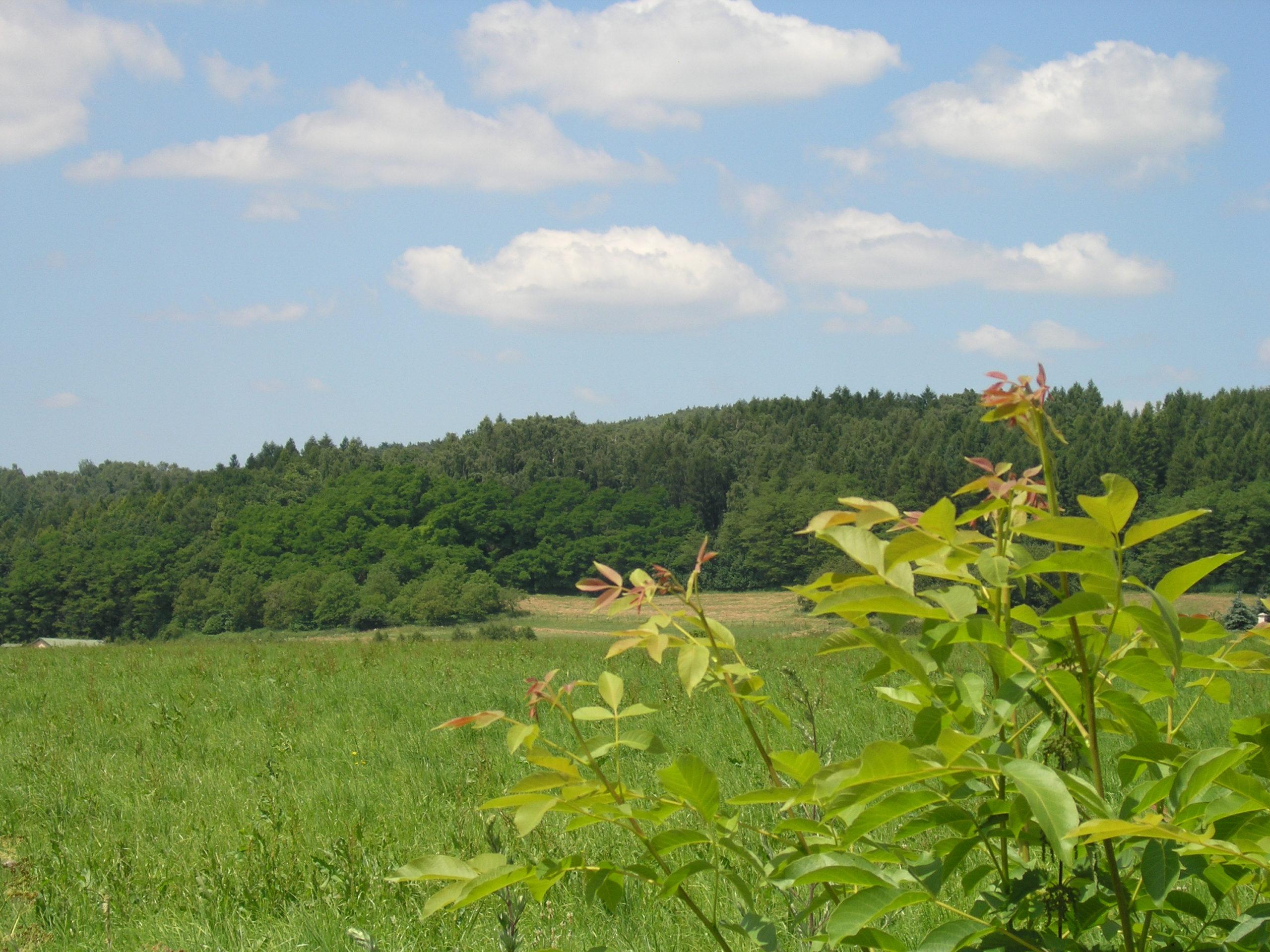 kożyczkowo widok na las