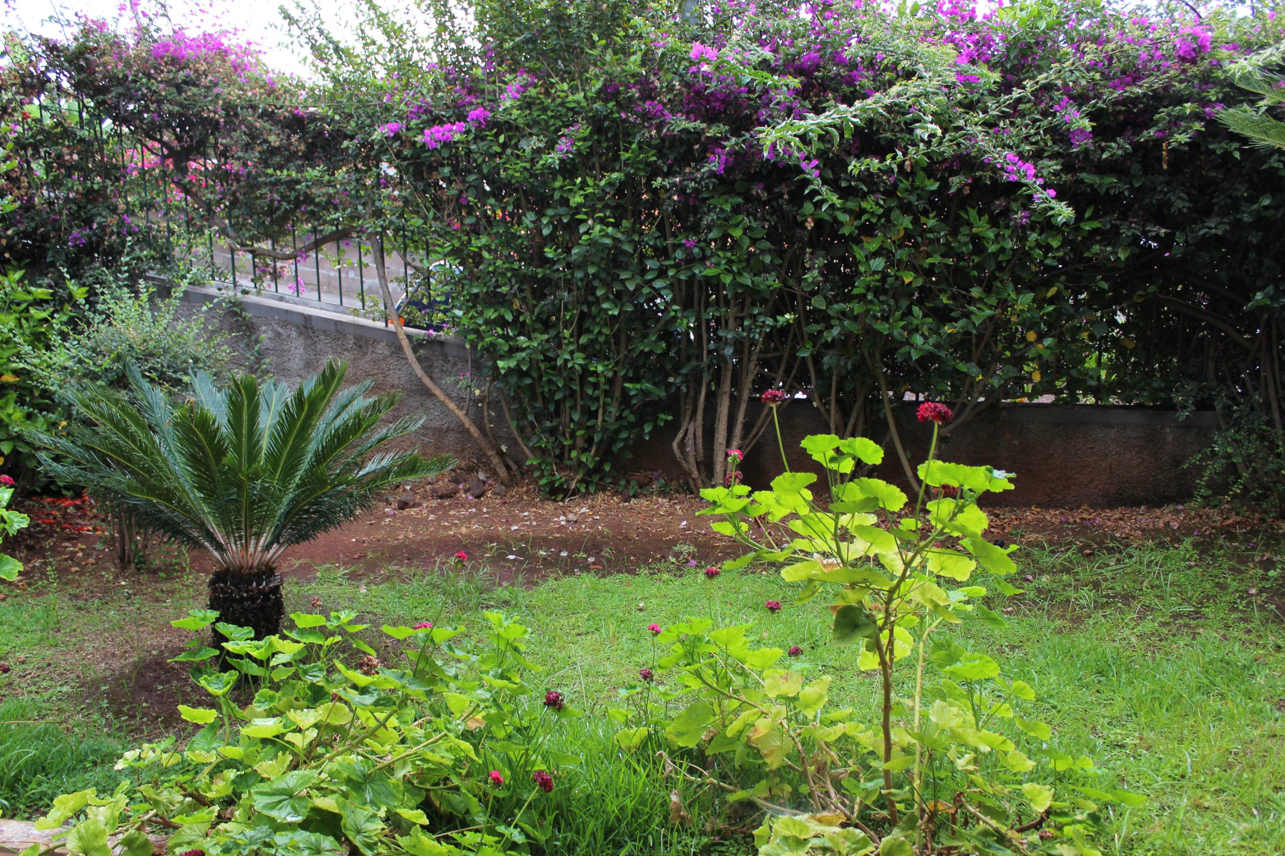 madera ogród