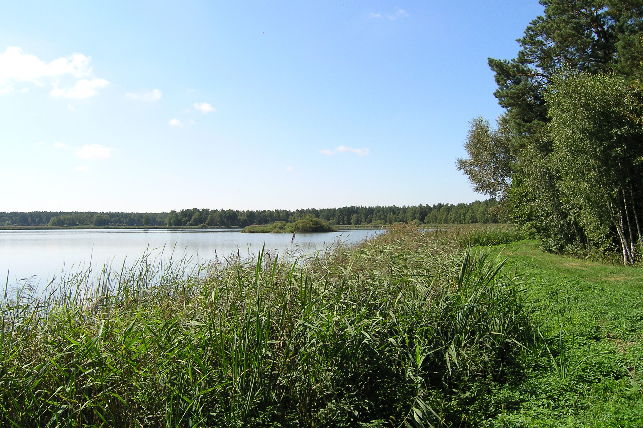 okuninka widok na jezioro
