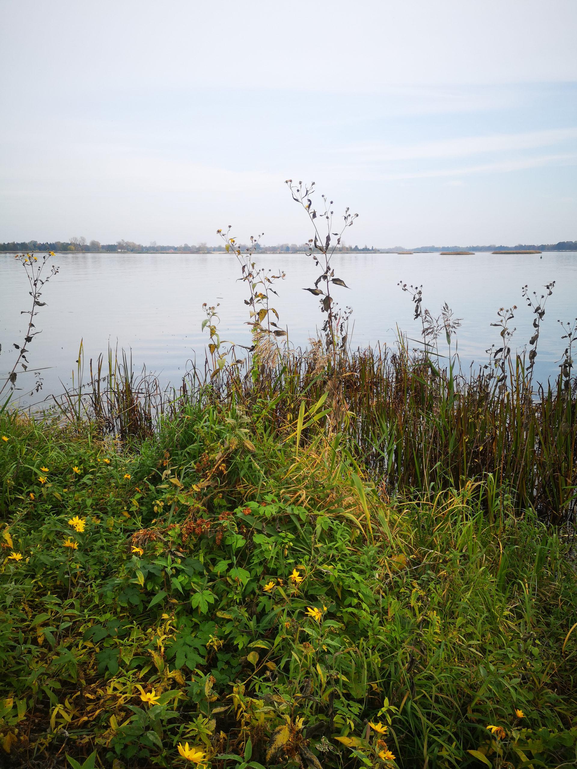 serock widok na jezioro i zioła nad jeziorem