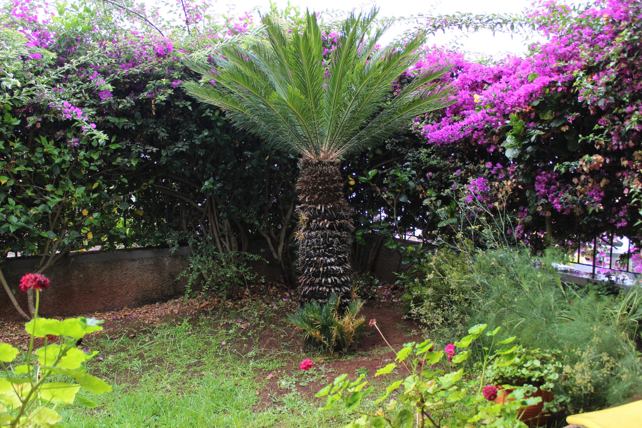 madera palma