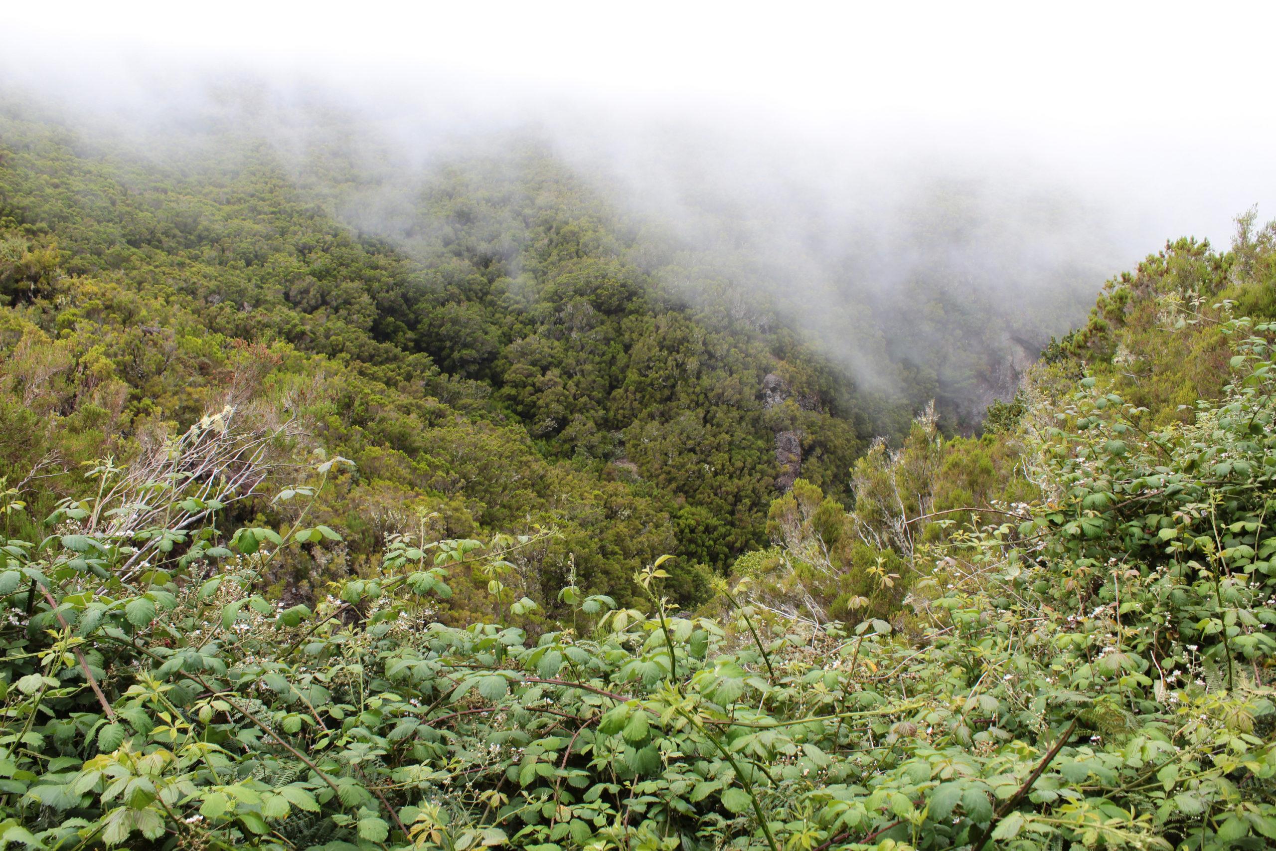 madera widok na zamglone góry
