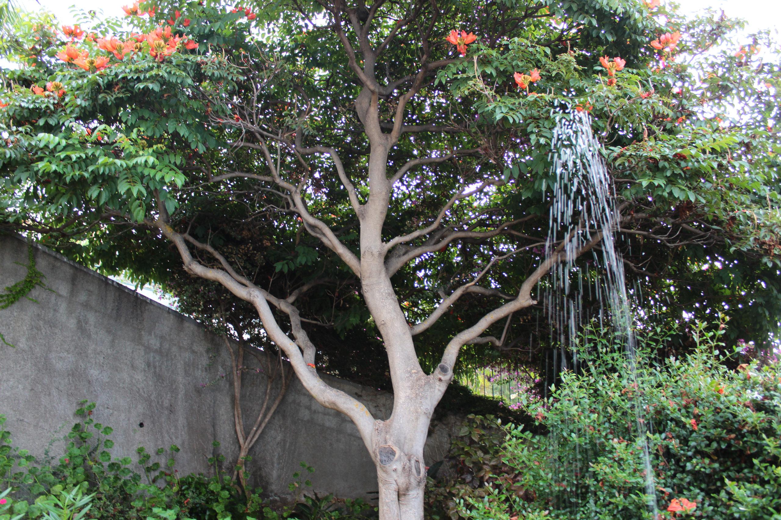 madera drzewo