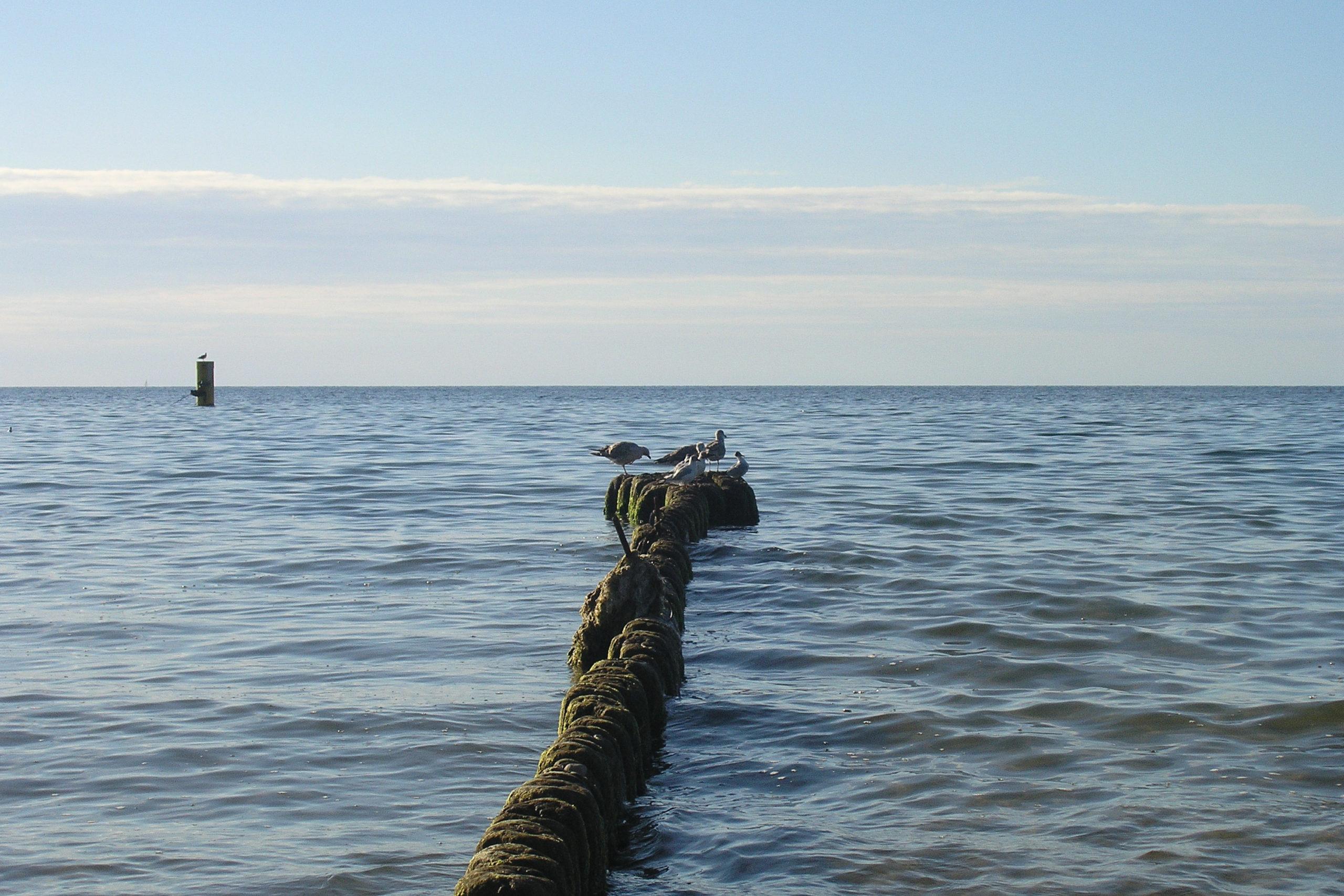 Międzyzdroje mewy na palach na morzu