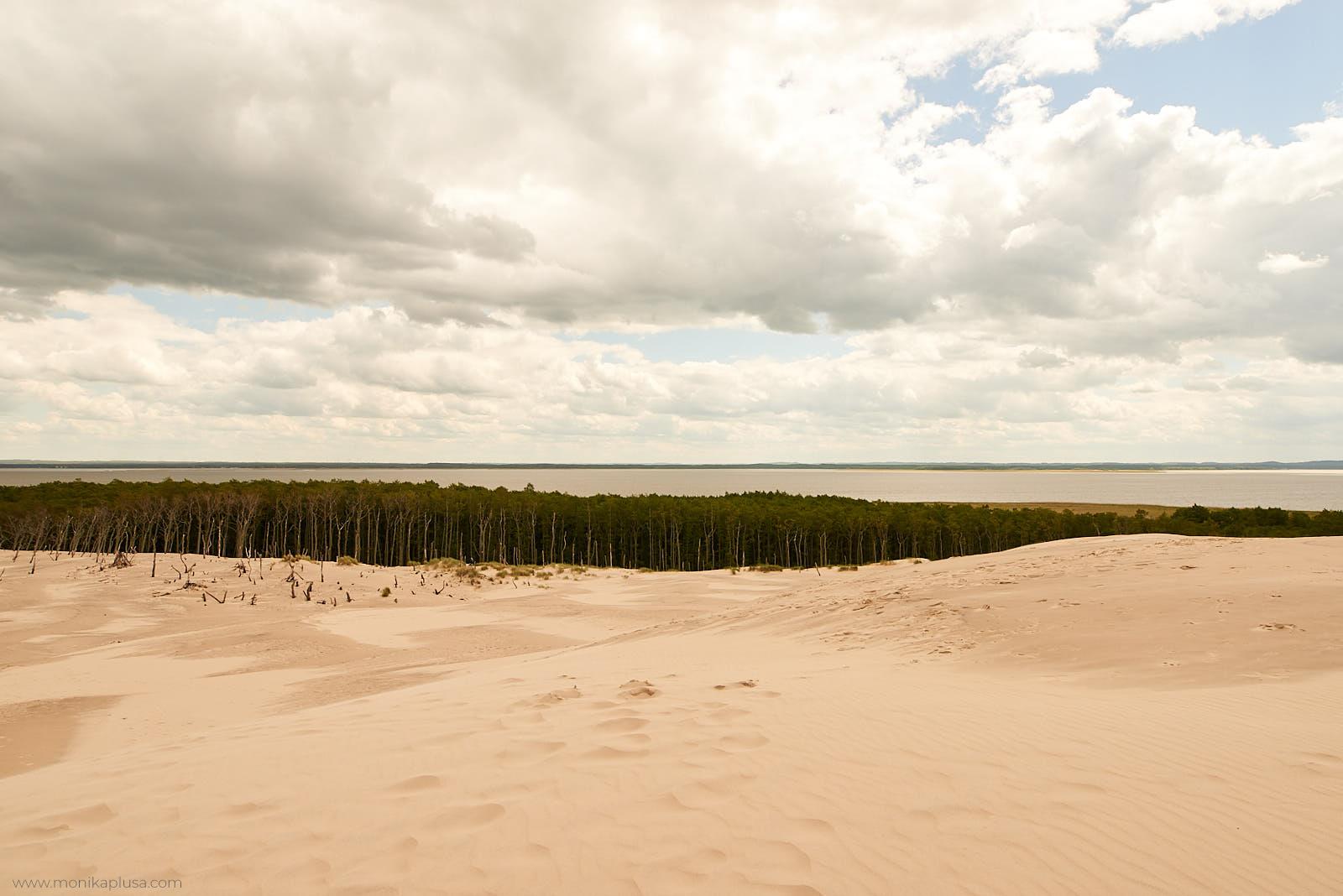 Łeba plaża i las