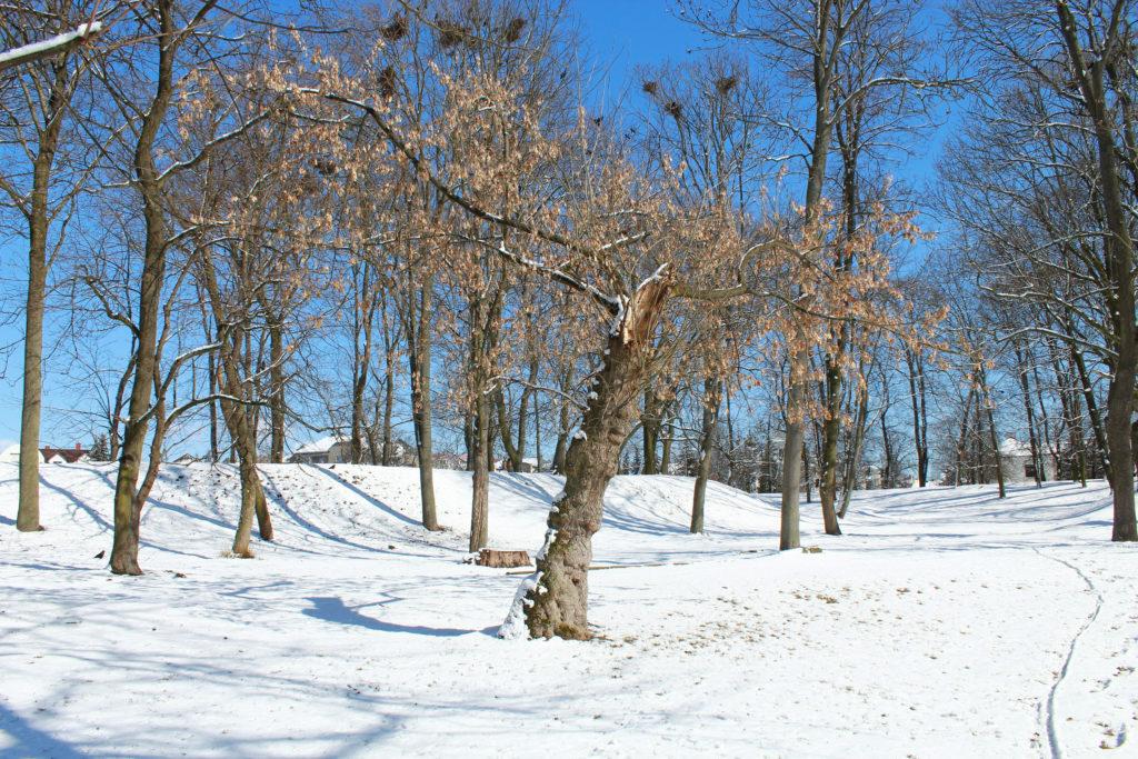 złamane drzewo w parku zimą