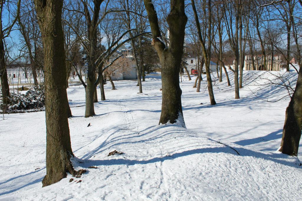drzewa w parku zimą