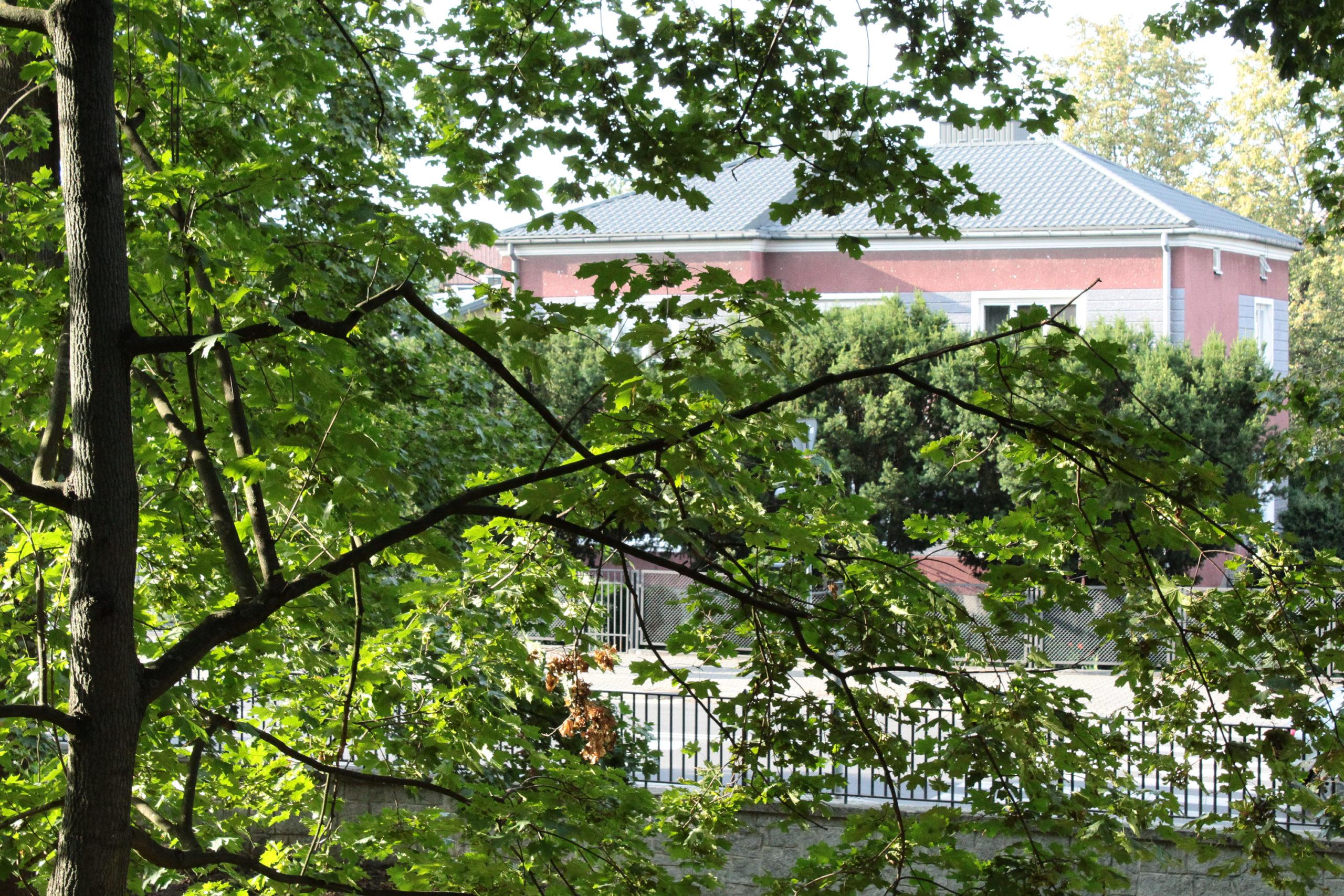 drzewa i budynek w tle