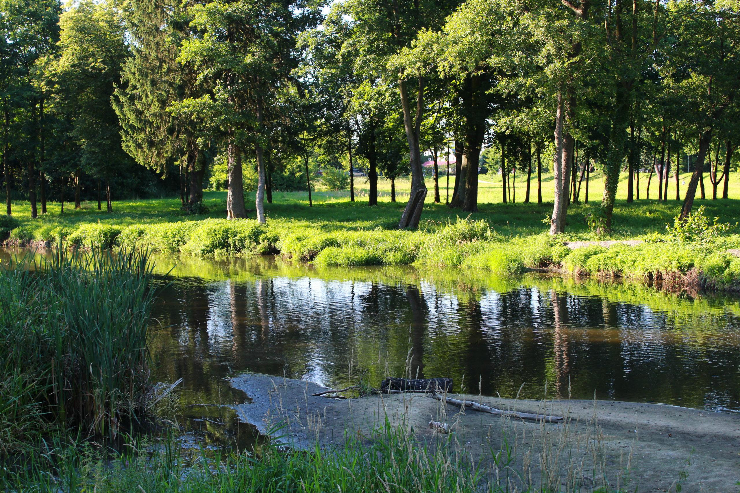 woda w parku