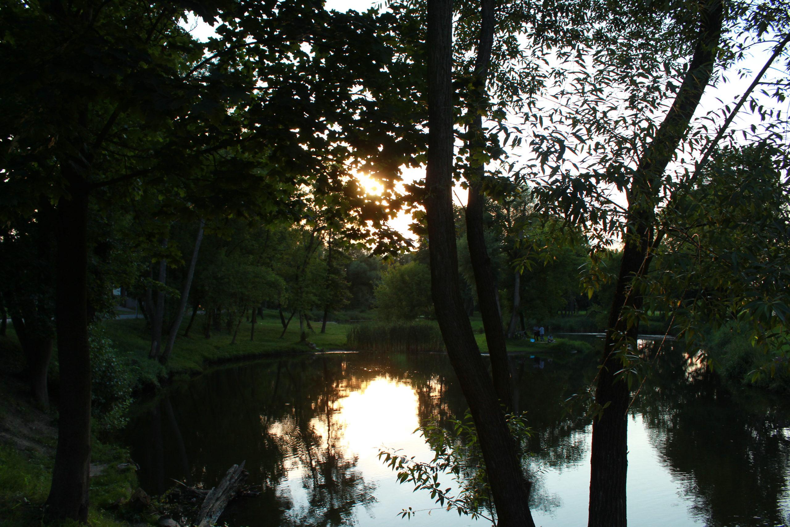 widok na staw w parku