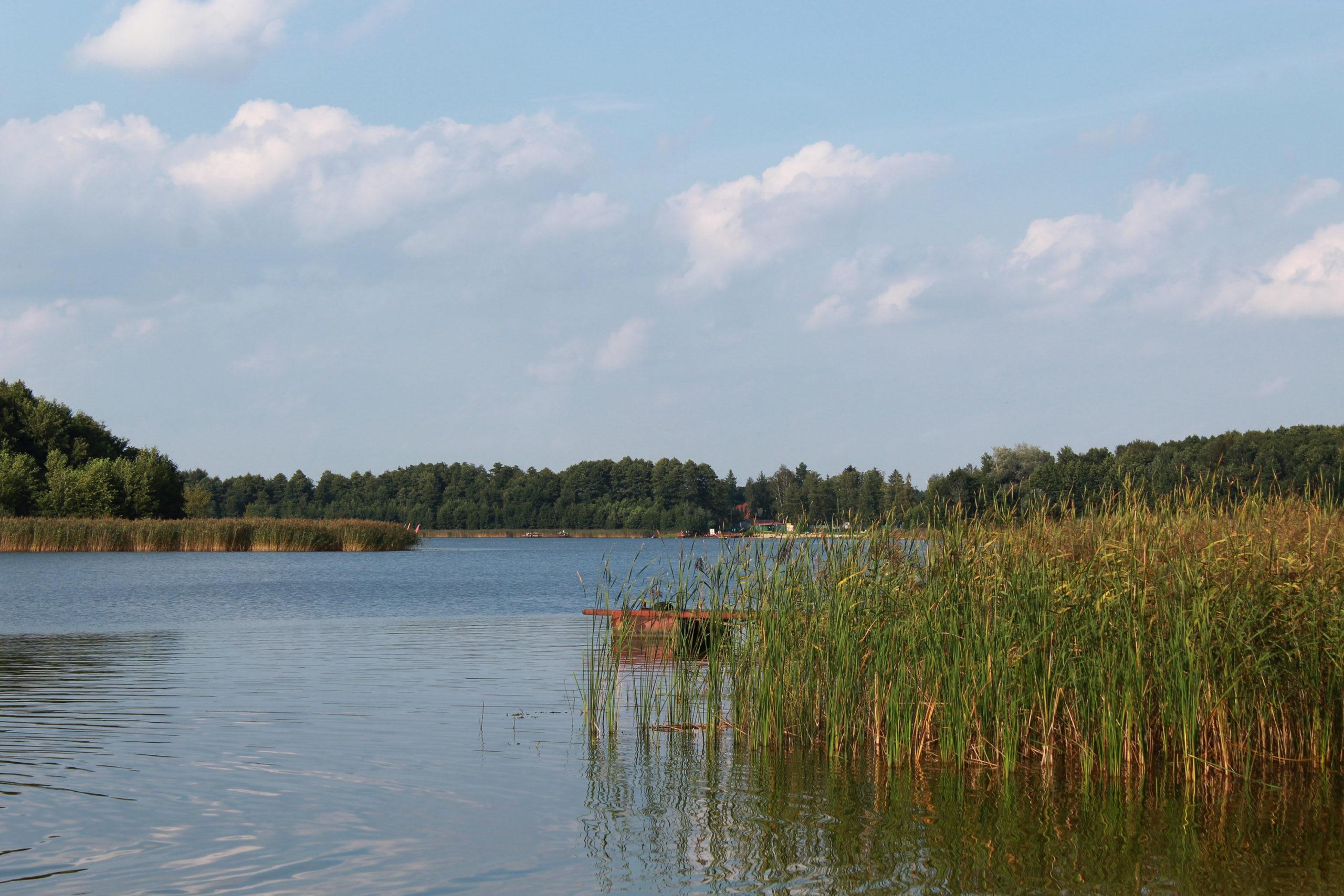 trzcina, jezioro i las