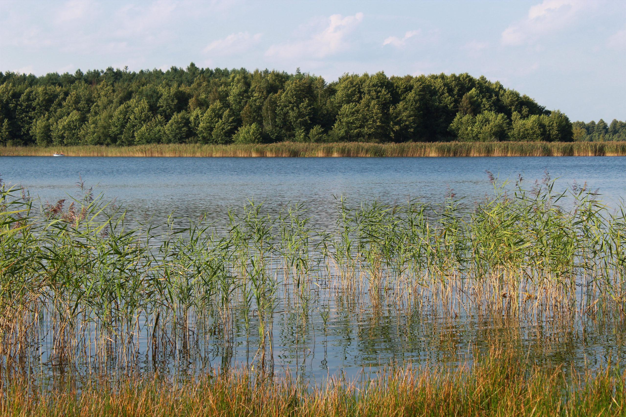 jezioro las i trzcina