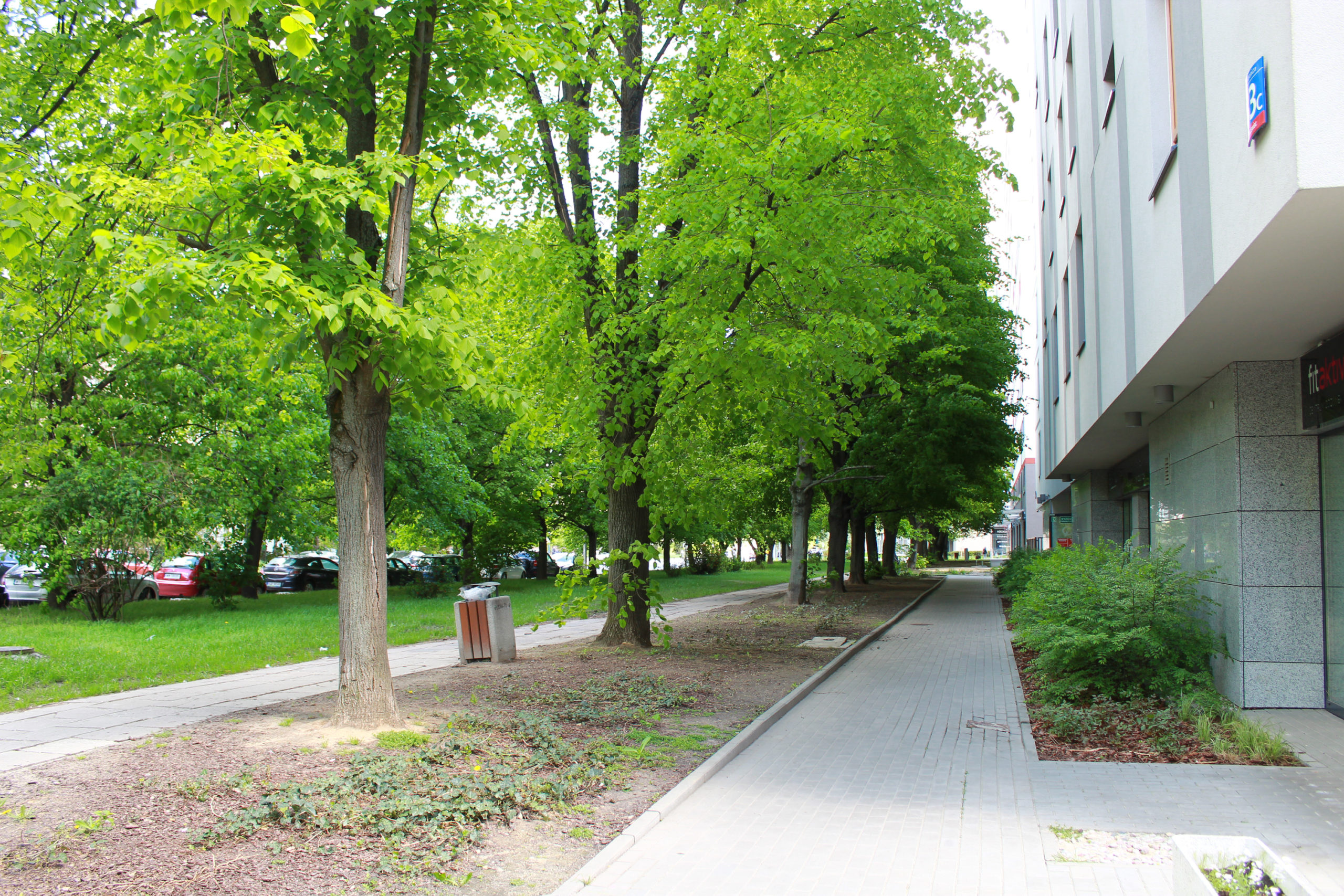 chodnik przy budynku wśród drzew